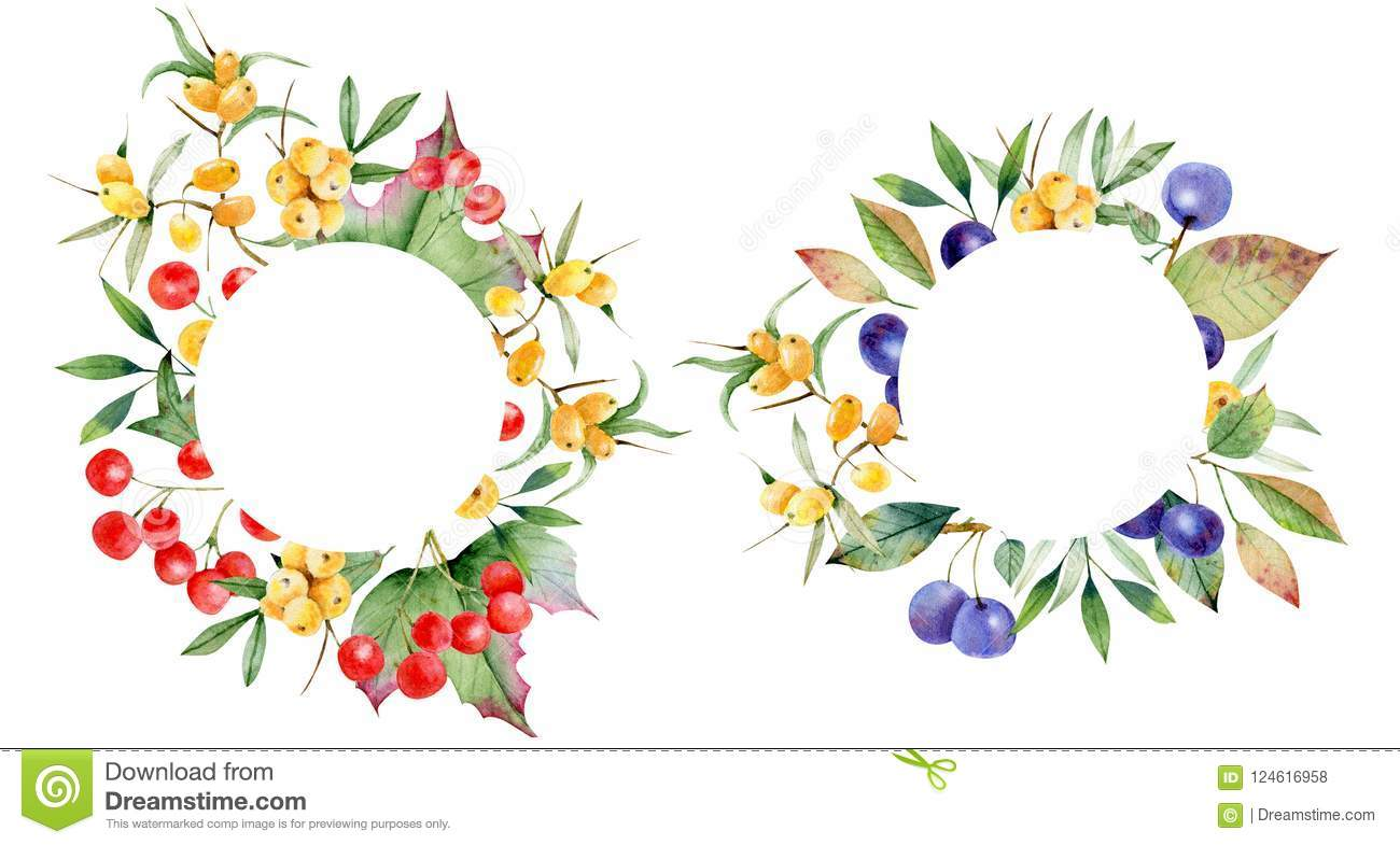 wreath of berries of torn and sea buckthorn suitable for cards