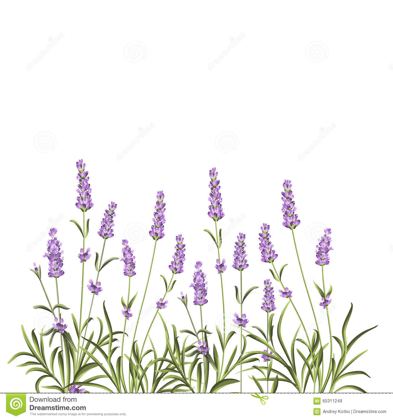 Wreath Of Lavender Flowers Stock Vector - Image: 65311249