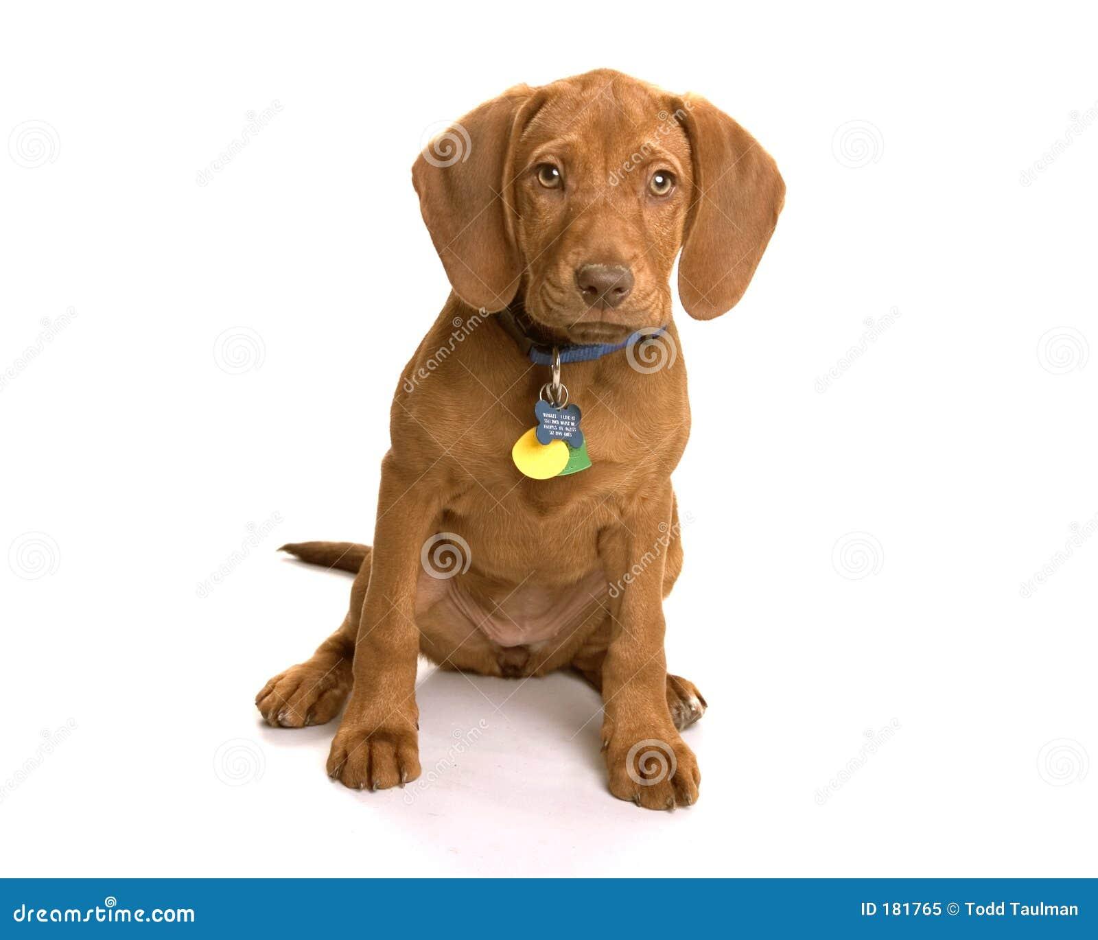 Wrigley der Hund