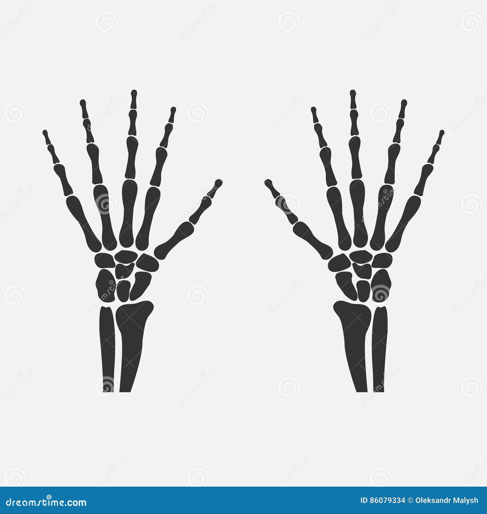 Wrist Hands Bones Stock Vector Illustration Of Anatomy 86079334
