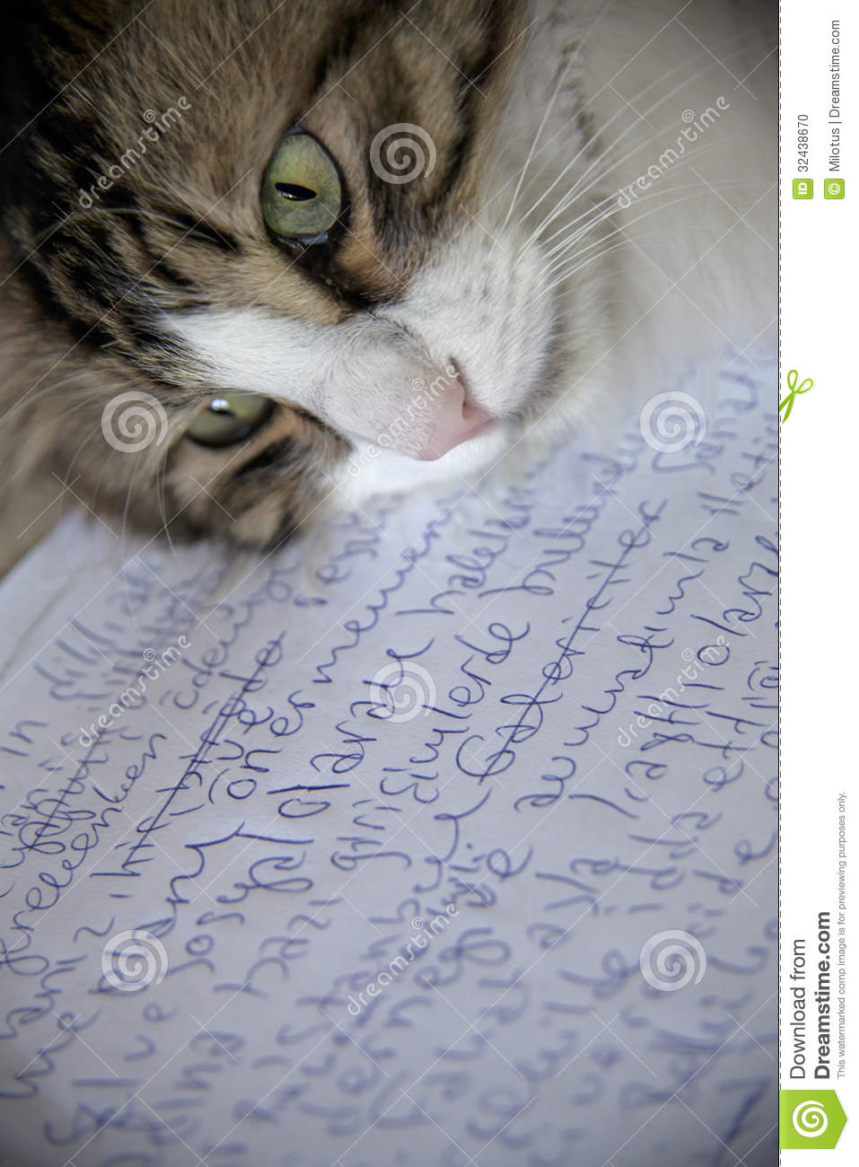 167 Words Short Essay on the Cat for kids