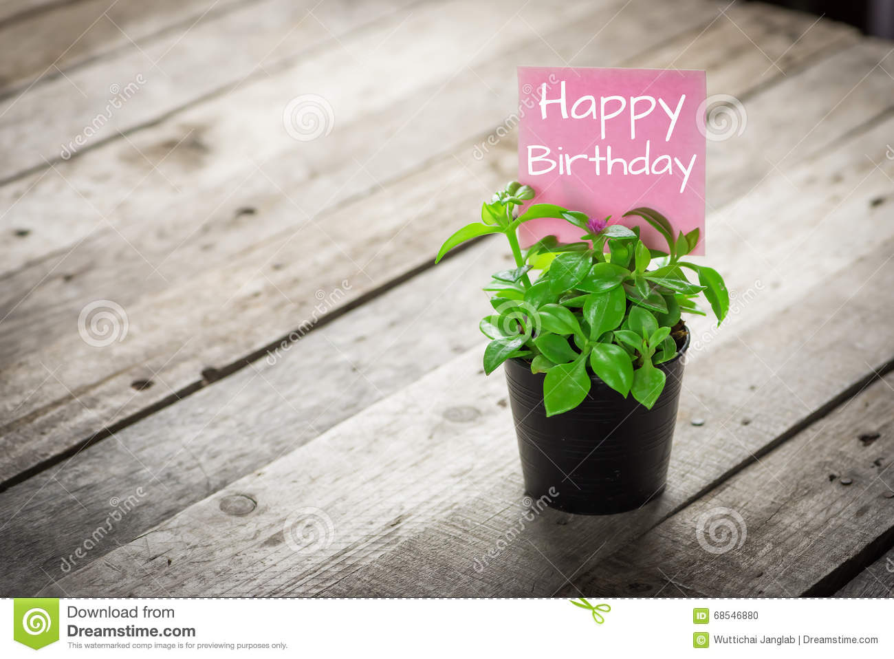 Writing Happy Birthday On Card And Ornamental Plants In Pots
