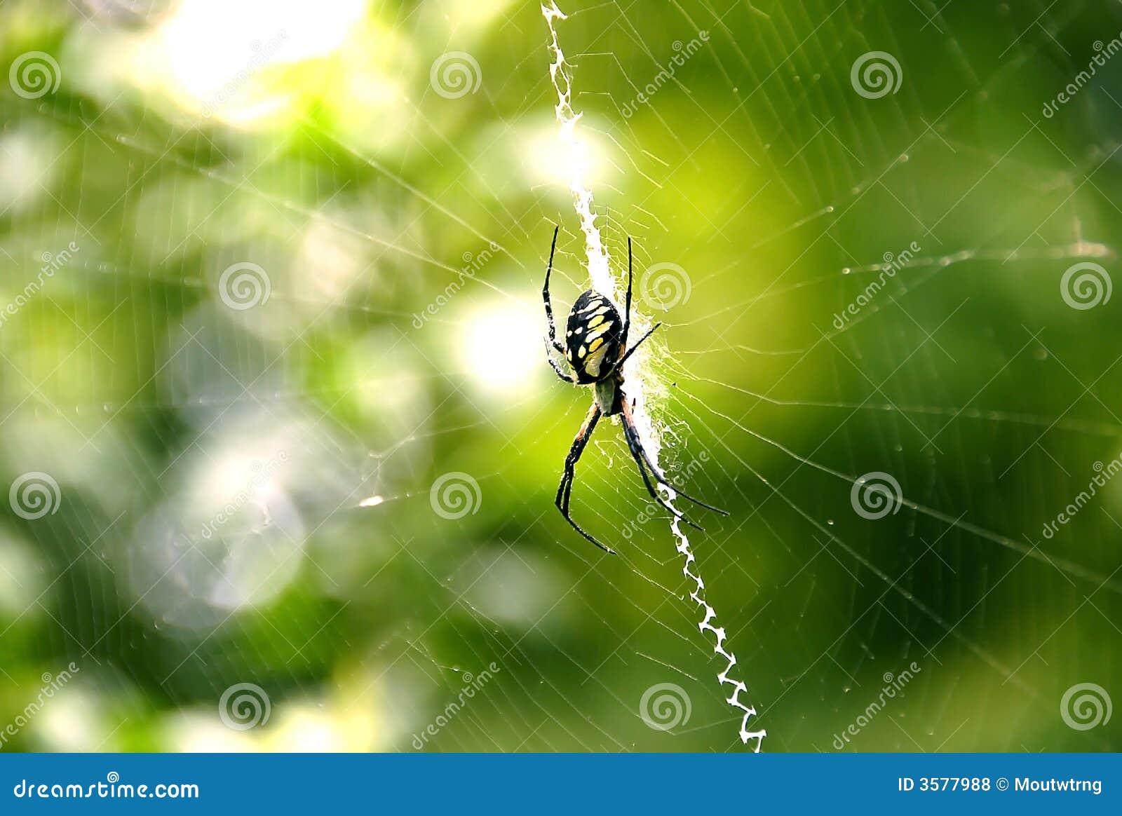 spider womens web essay