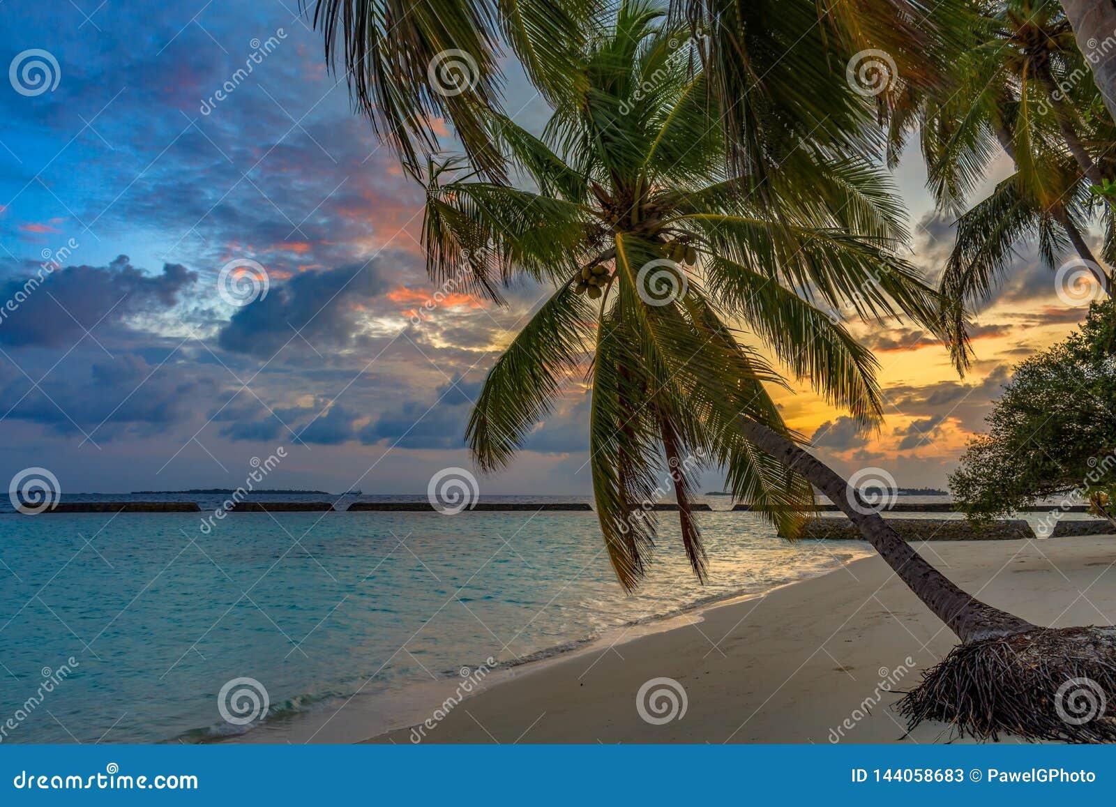 Wschód słońca na tropikalnej plaży przy Maldives drzewkami palmowymi i turkus wodą