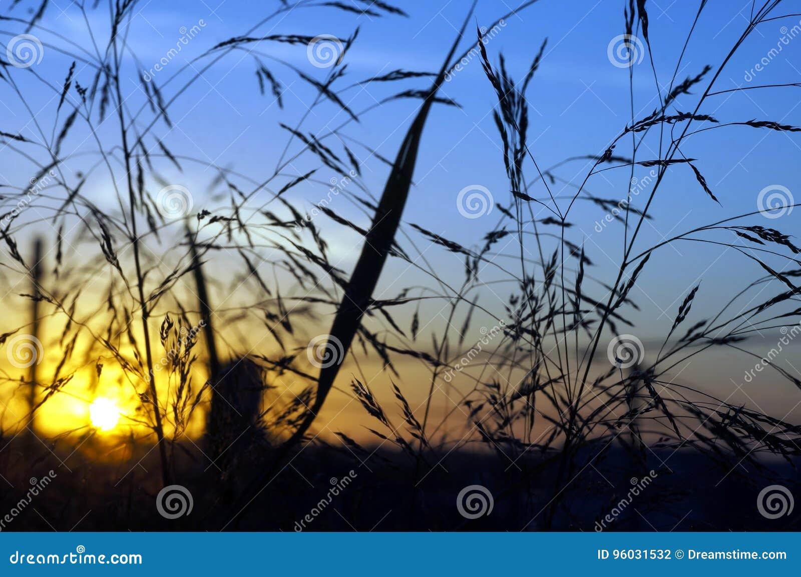 Wschód słońca przez ranek trawy