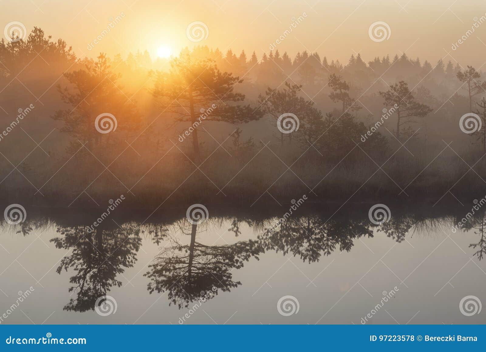 Wschód słońca w mglistym bagnie podczas lata