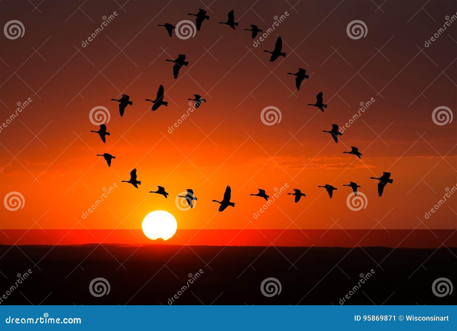 Wschód słońca, zmierzch miłość, romans, ptaki