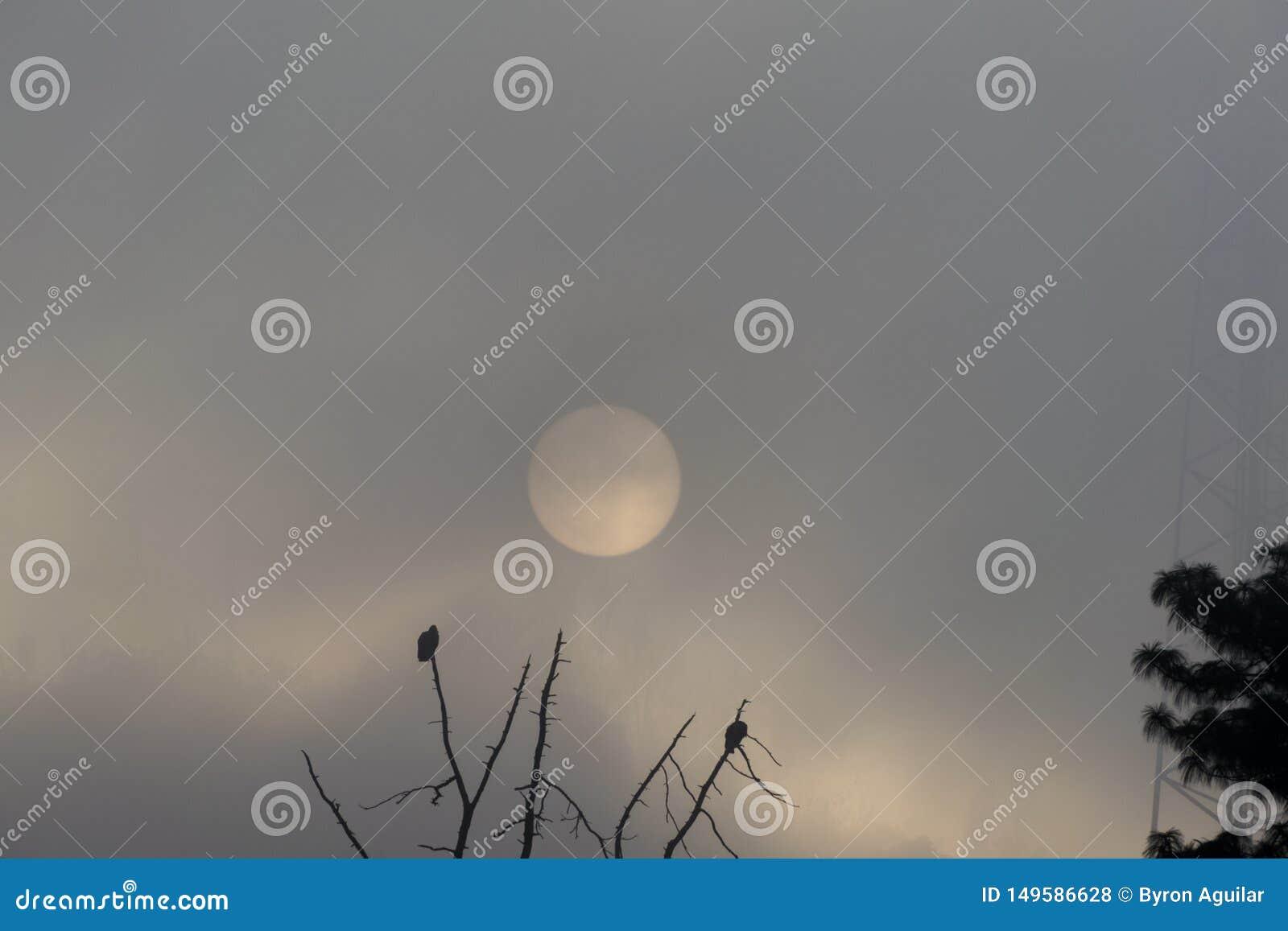 Wsch?d s?o?ca w Gwatemala, drzewo z myszo?owami zdejmuje lot S?o?ce w mgle
