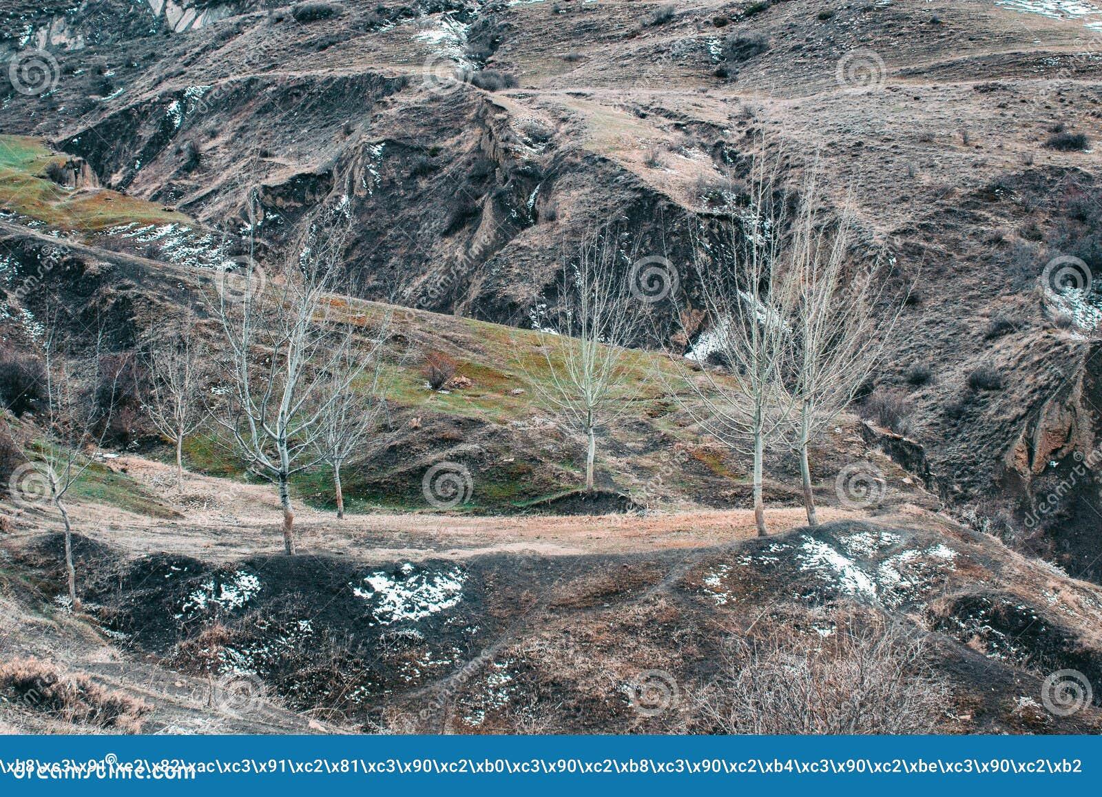 Wspaniały panoramiczny widok iglasty las na możnych Carpathians górach pięknym niebieskiego nieba tle i