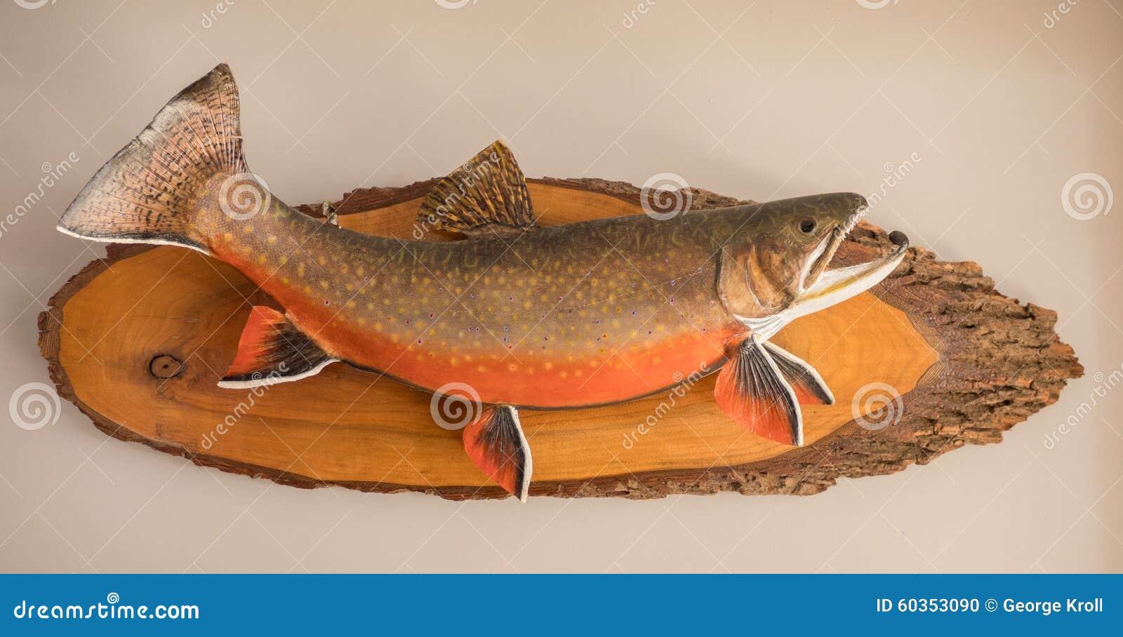Wspinająca się ryba