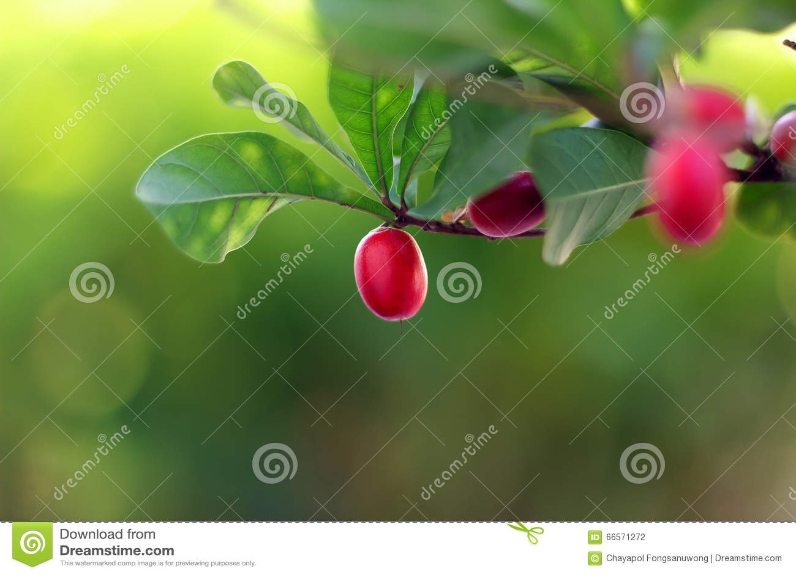 Wunder-Früchte