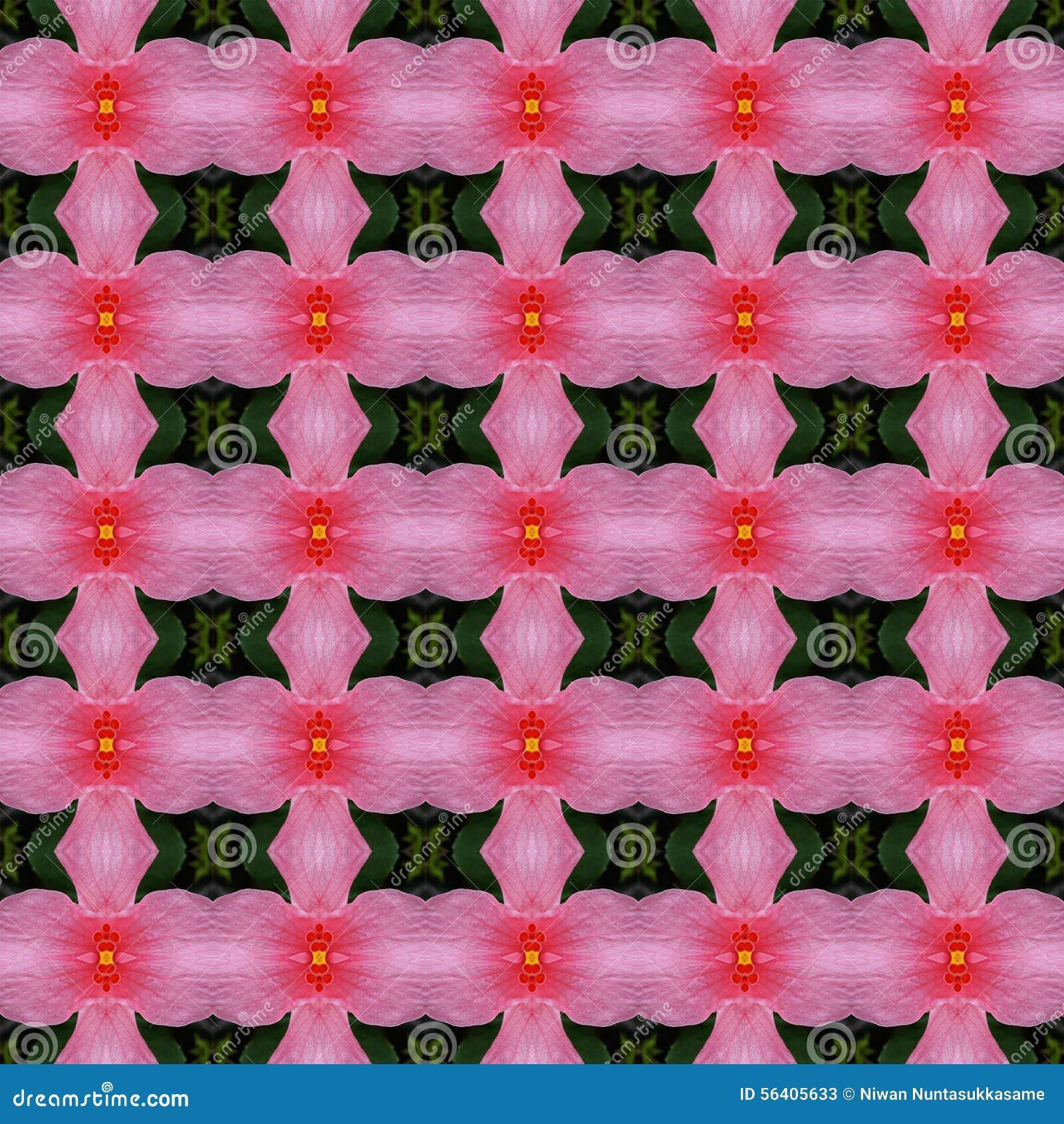 Wunderbar von der rosa Hibiscusblume in voller Blüte nahtlos