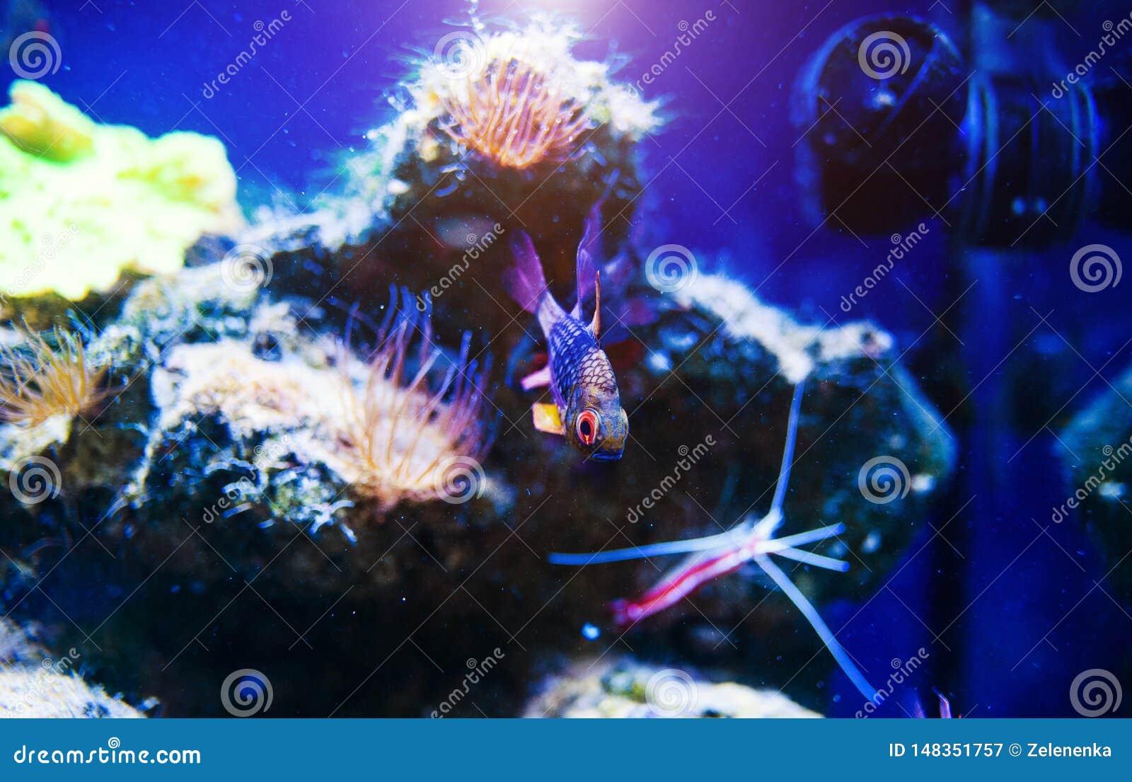 Wunderbare und sch?ne Unterwasserwelt mit Korallen und tropischen Fischen