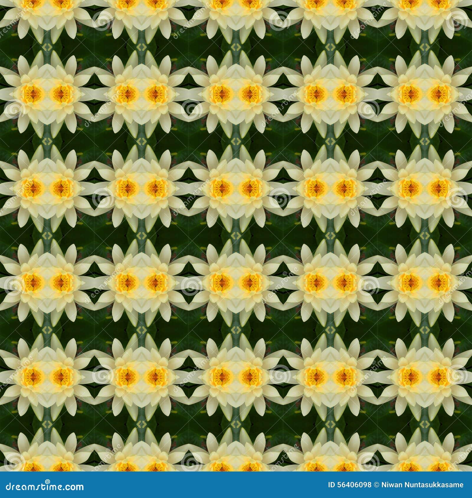 Wunderbarer gelber Lotos in voller Blüte nahtlos