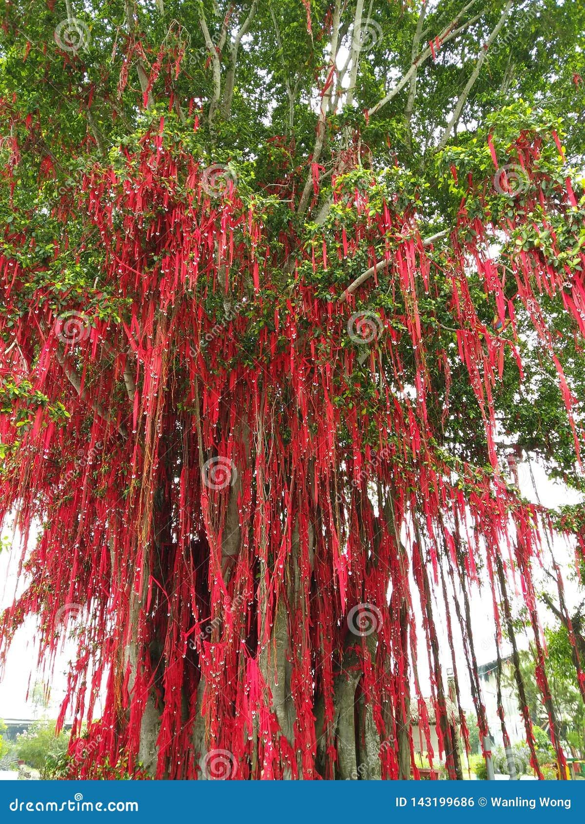 Wunschbaum in Malaysia