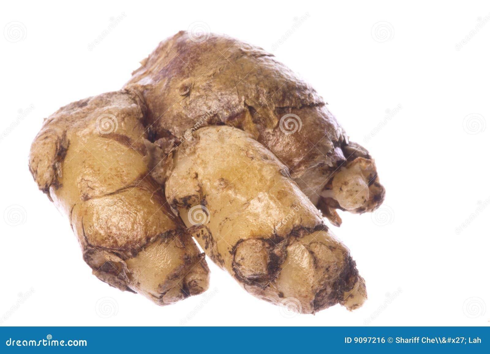 Wurzel-Makro des Finger-(Cekor) getrennt