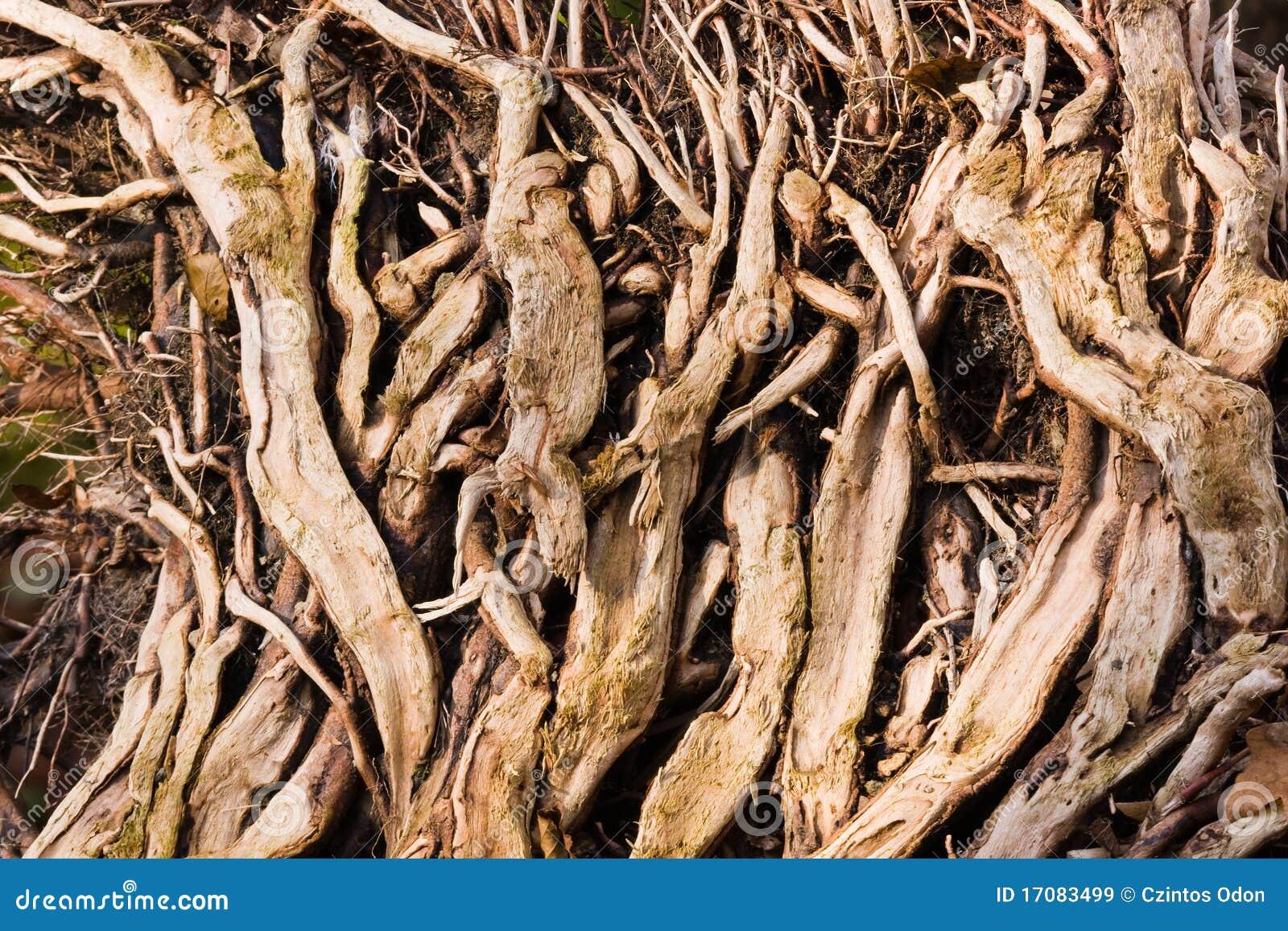 Wurzeln im Wald