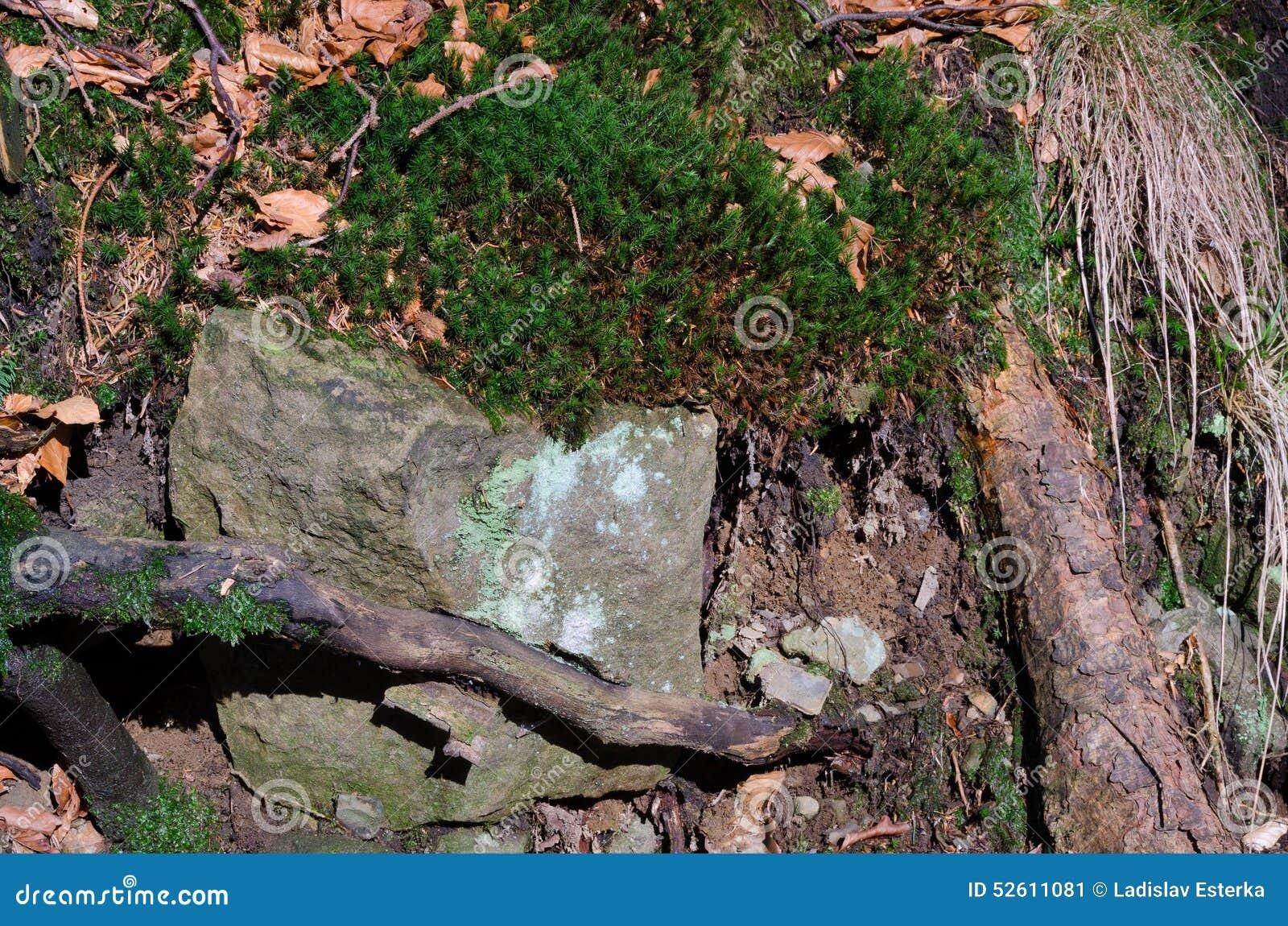 Wurzeln mit Felsen