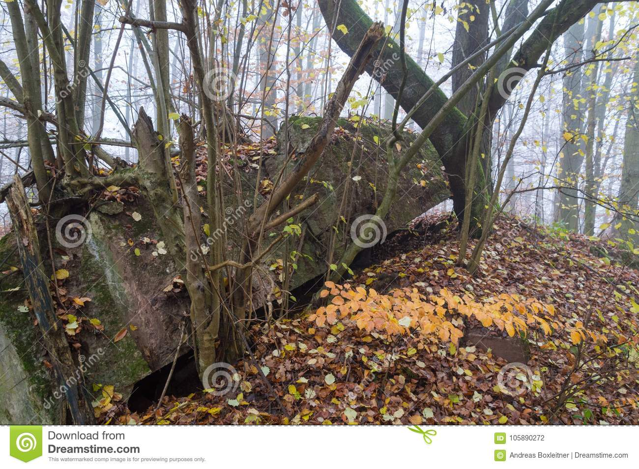 WW2 bunker in germany stock photo  Image of germany - 105890272