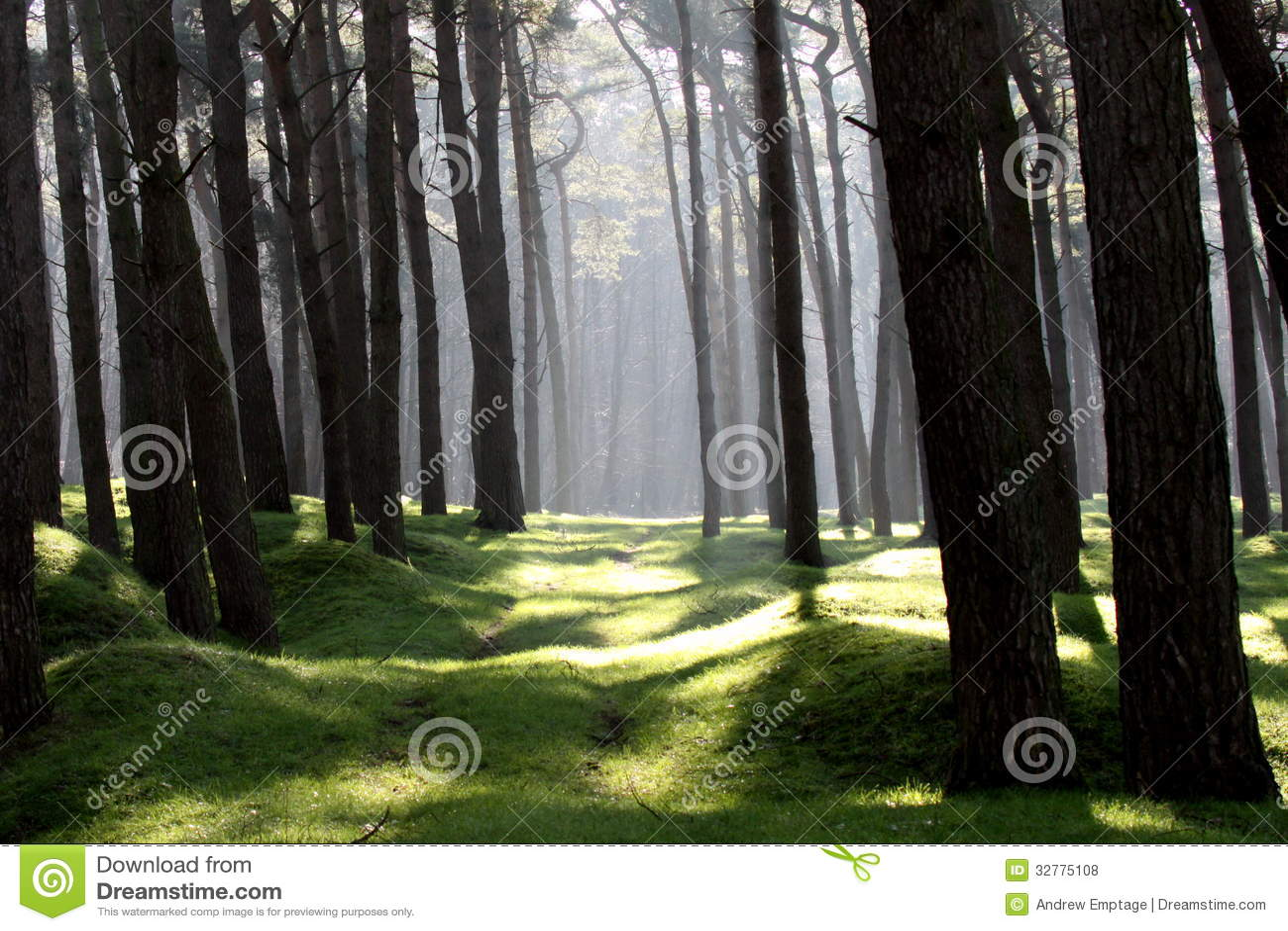 ww1 landscape memorial forest - photo #21