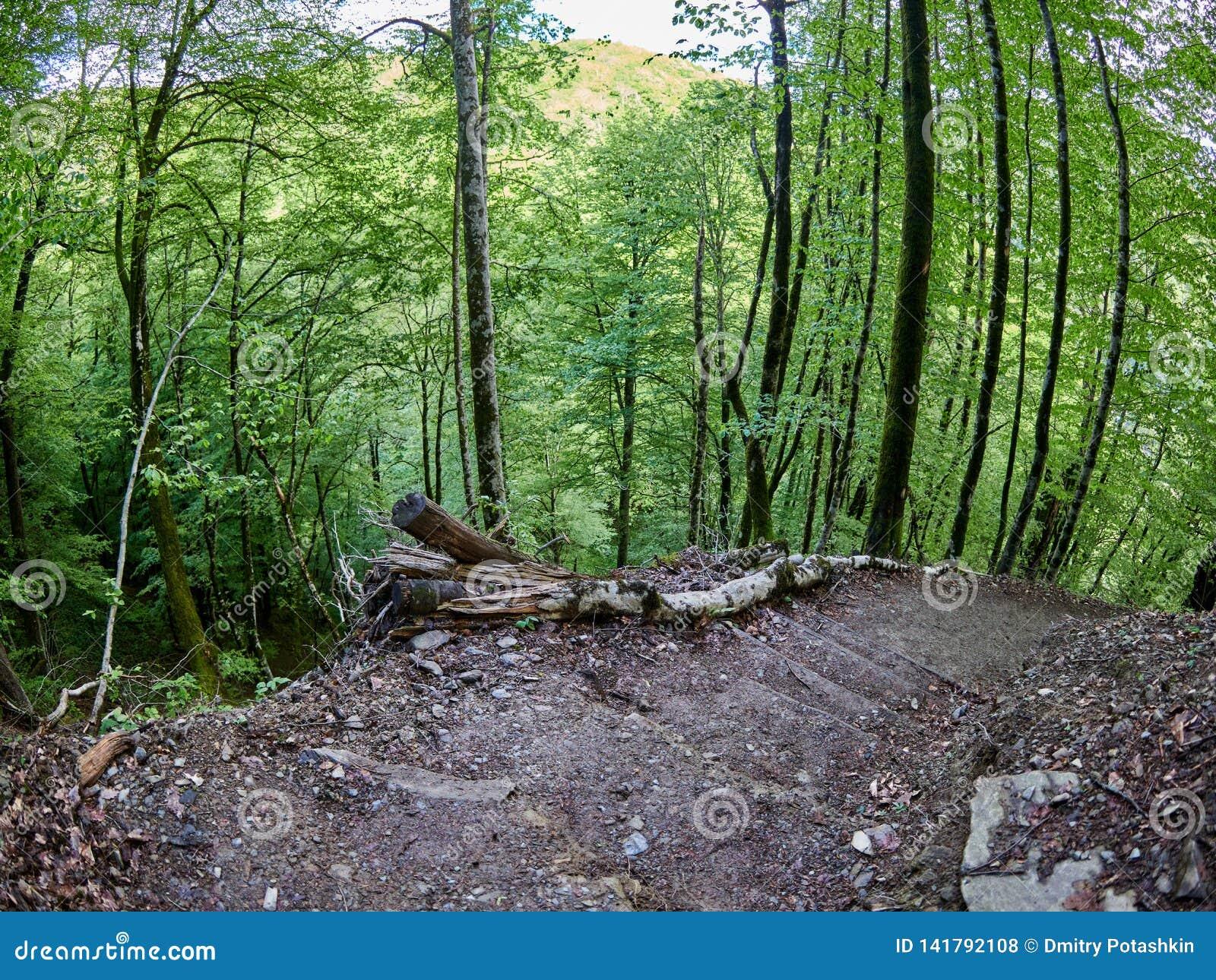 Wycieczkować ślad pochodzi od bardzo stromego skłonu w wiosna lesie
