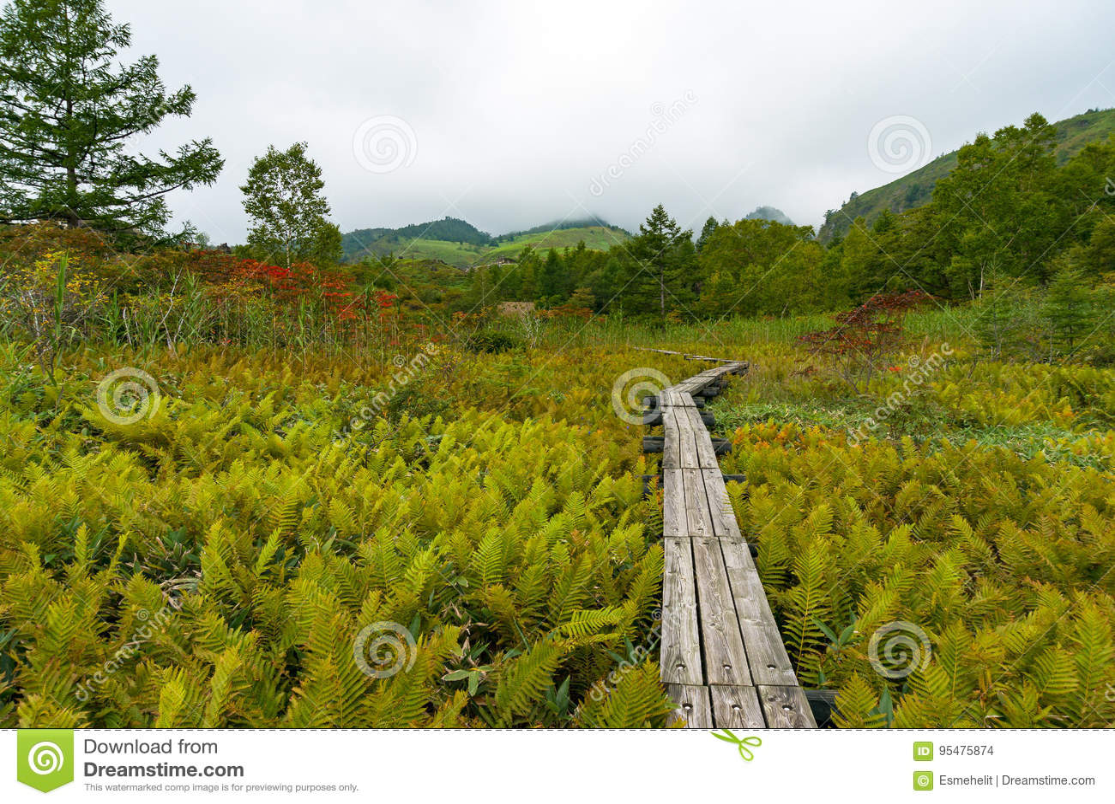 Wycieczkować ścieżkę drewniane deski w Japońskiej wsi