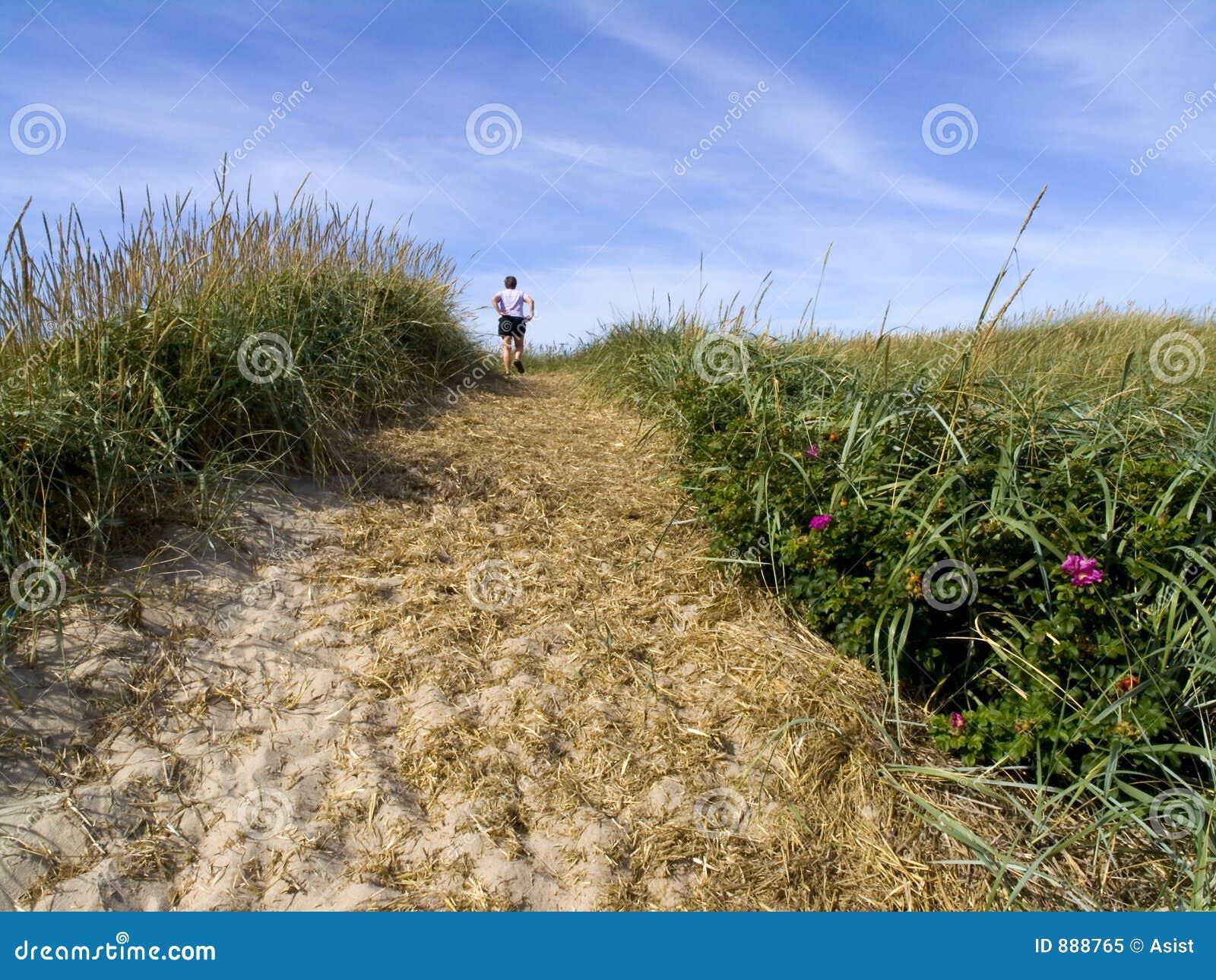 Wydm nadmiernie trawiasty ślady piasku