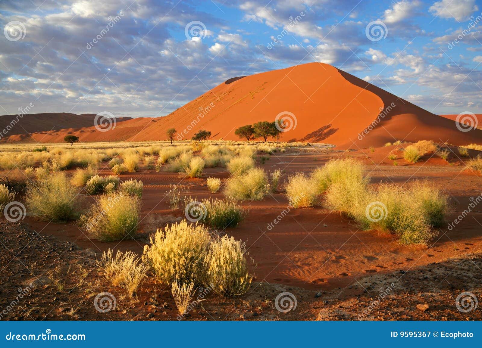 Wydmowy trawy Namibia nieba sossusvlei