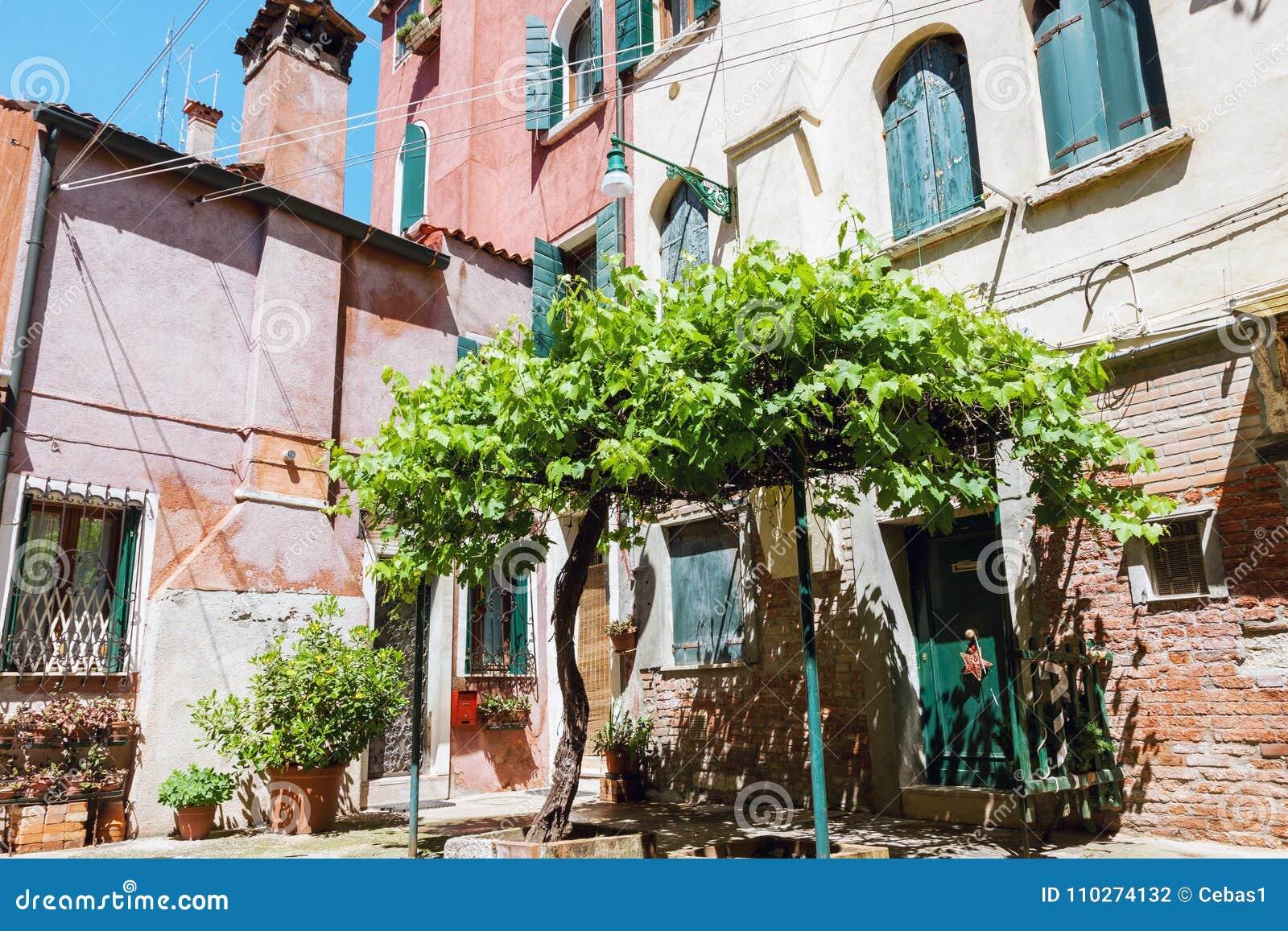 Wygodny podwórze z starym gronowym drzewem w Wenecja