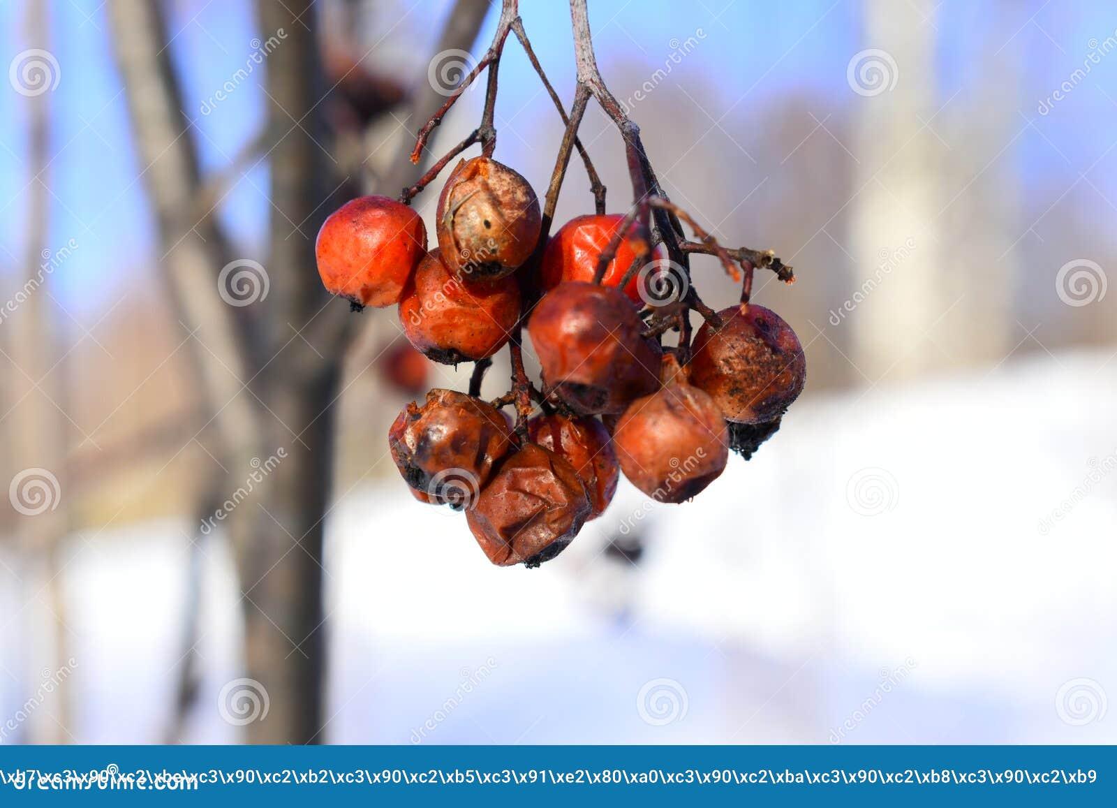 Wyklucza drzewa rodzimych pewni tereny; niedawna definicja zawiera drzewa rodzimych najwięcej Europa i części Azja