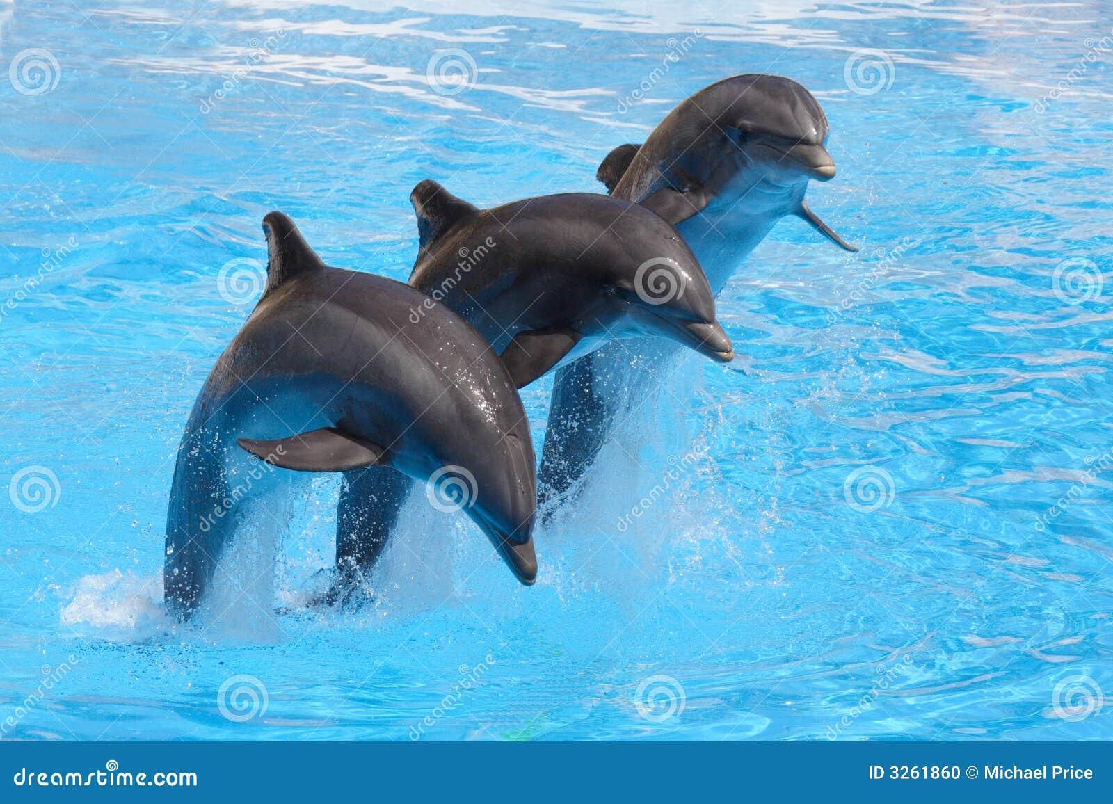 Wykonać delfinów