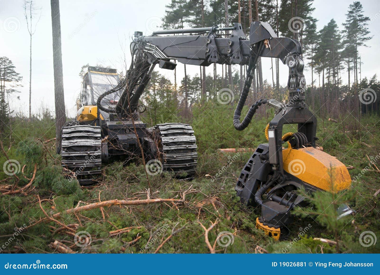 Wylesienie