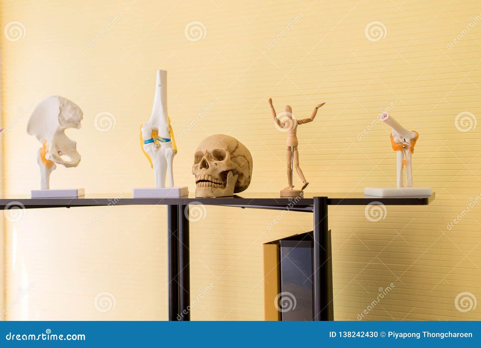 Wyposażenia ciała ludzkiego anatomia zawiera czaszkę, kość, mózg modela dla edukacji badania i medyczną naukę,