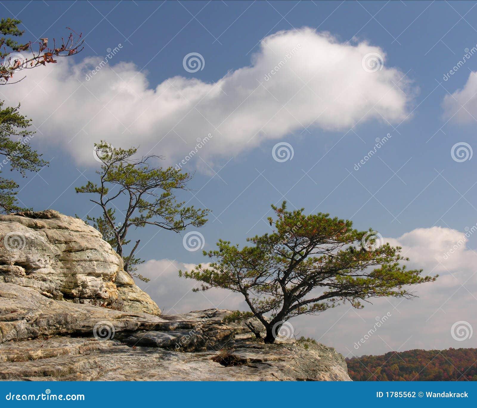 Wypustów rockowi drzewa