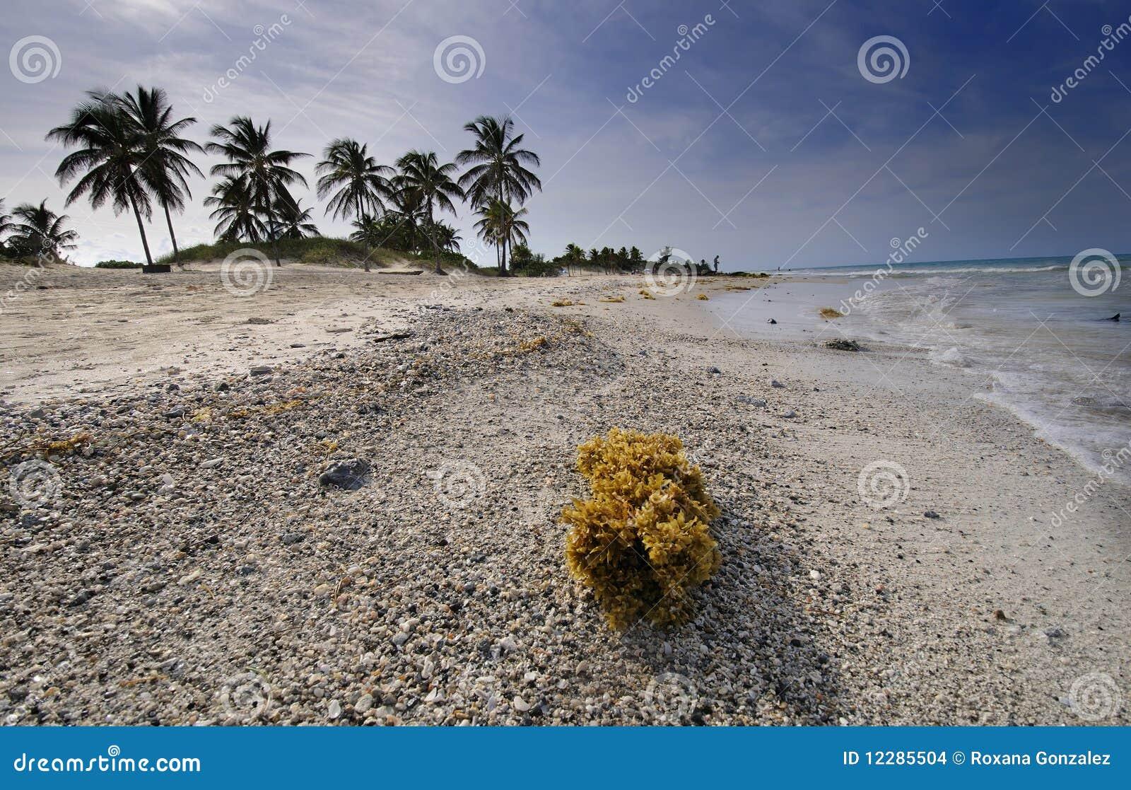 Wyrzucać na brzeg kubańskiego del Mar Maria Santa