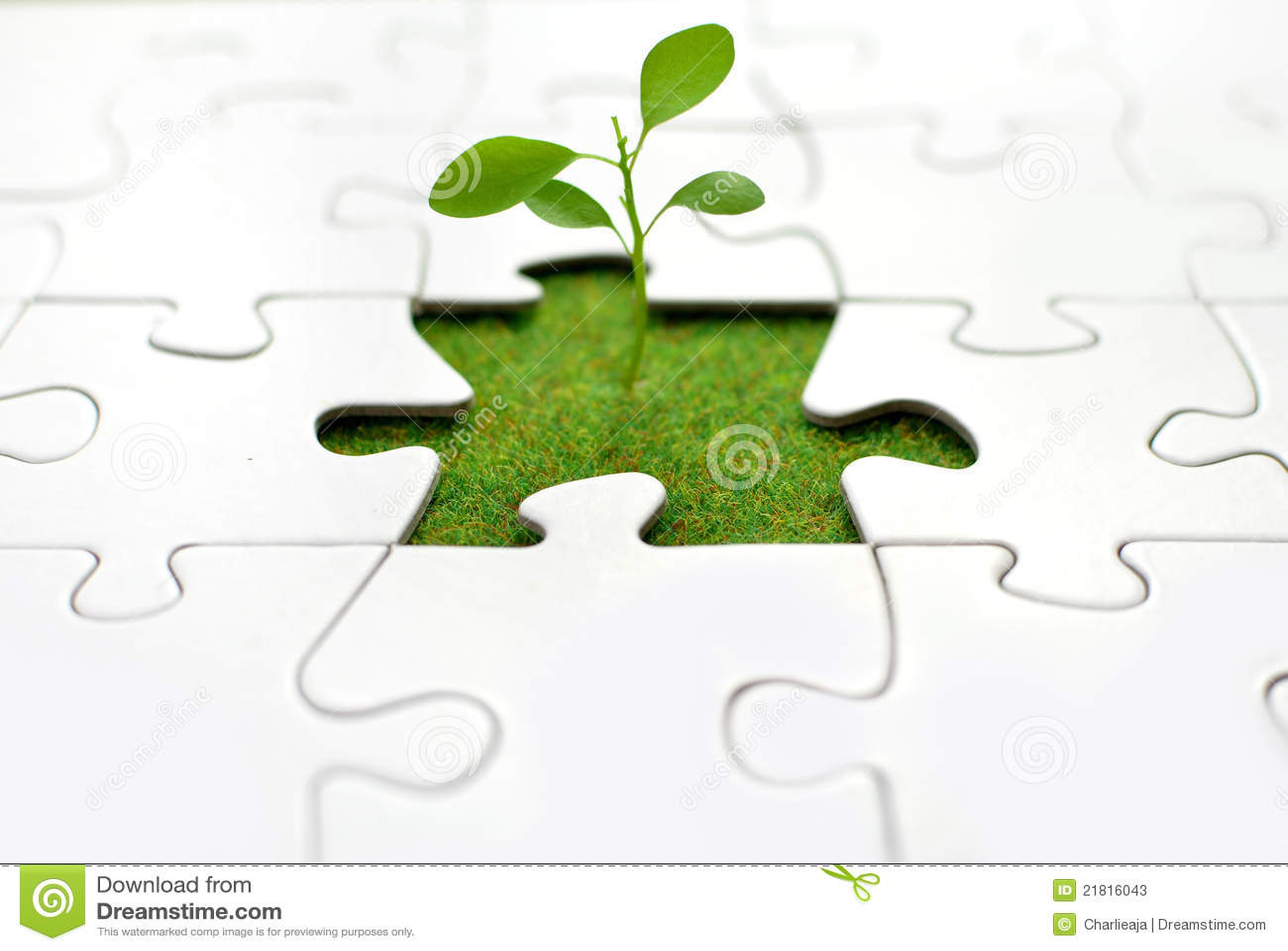 Wyrzynarki roślina
