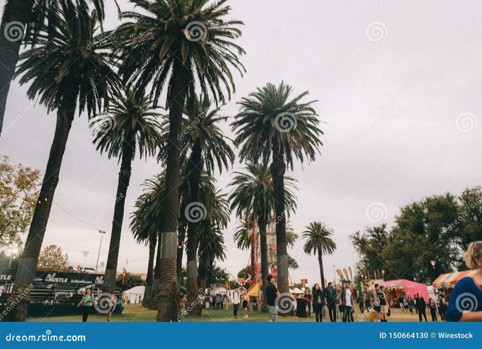 Wysocy drzewka palmowe w parku