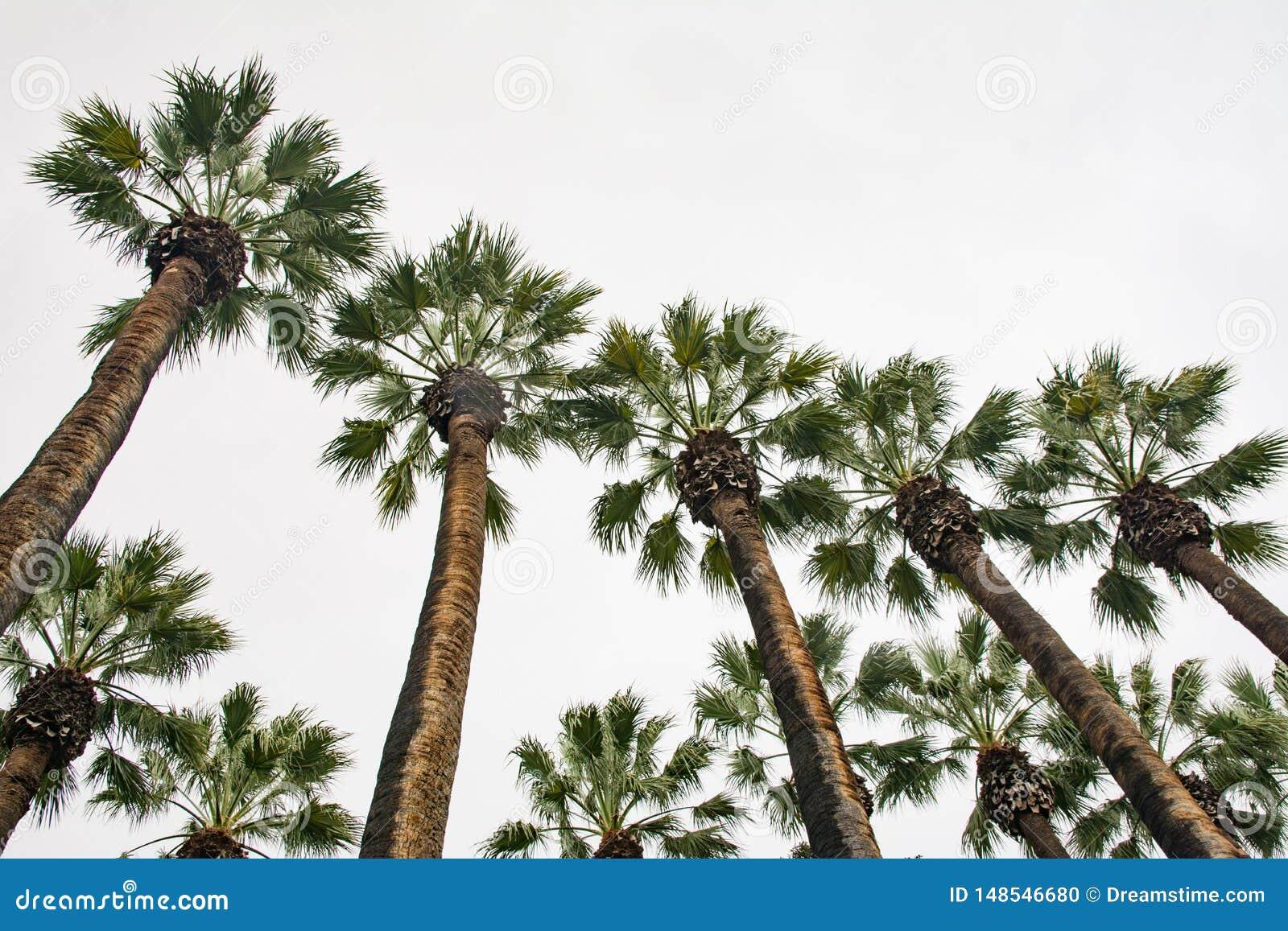 Wysocy drzewka palmowe zbli?aj? wej?cie Ateny park narodowy