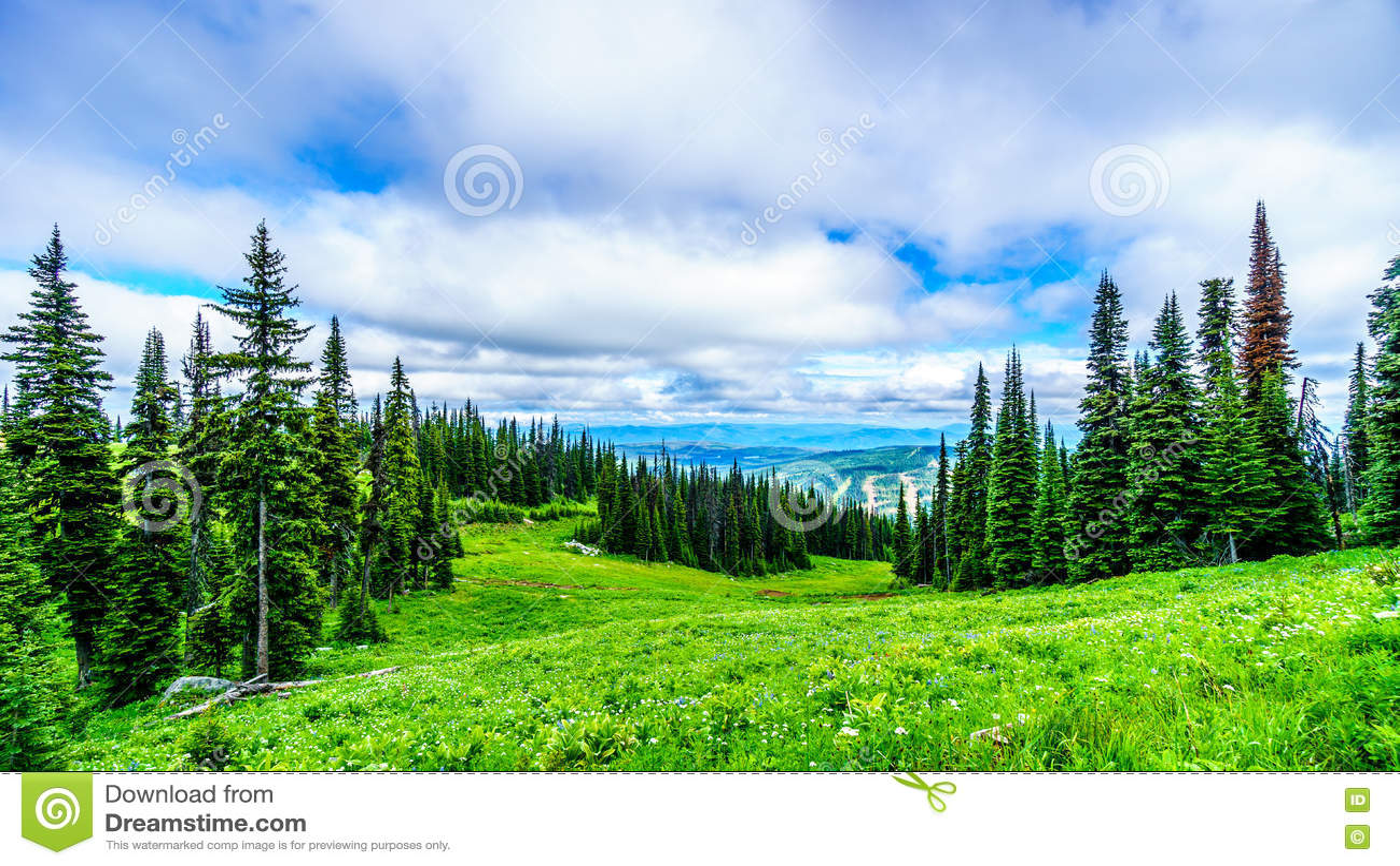 Wysoki Alpejski las, łąki i lasy