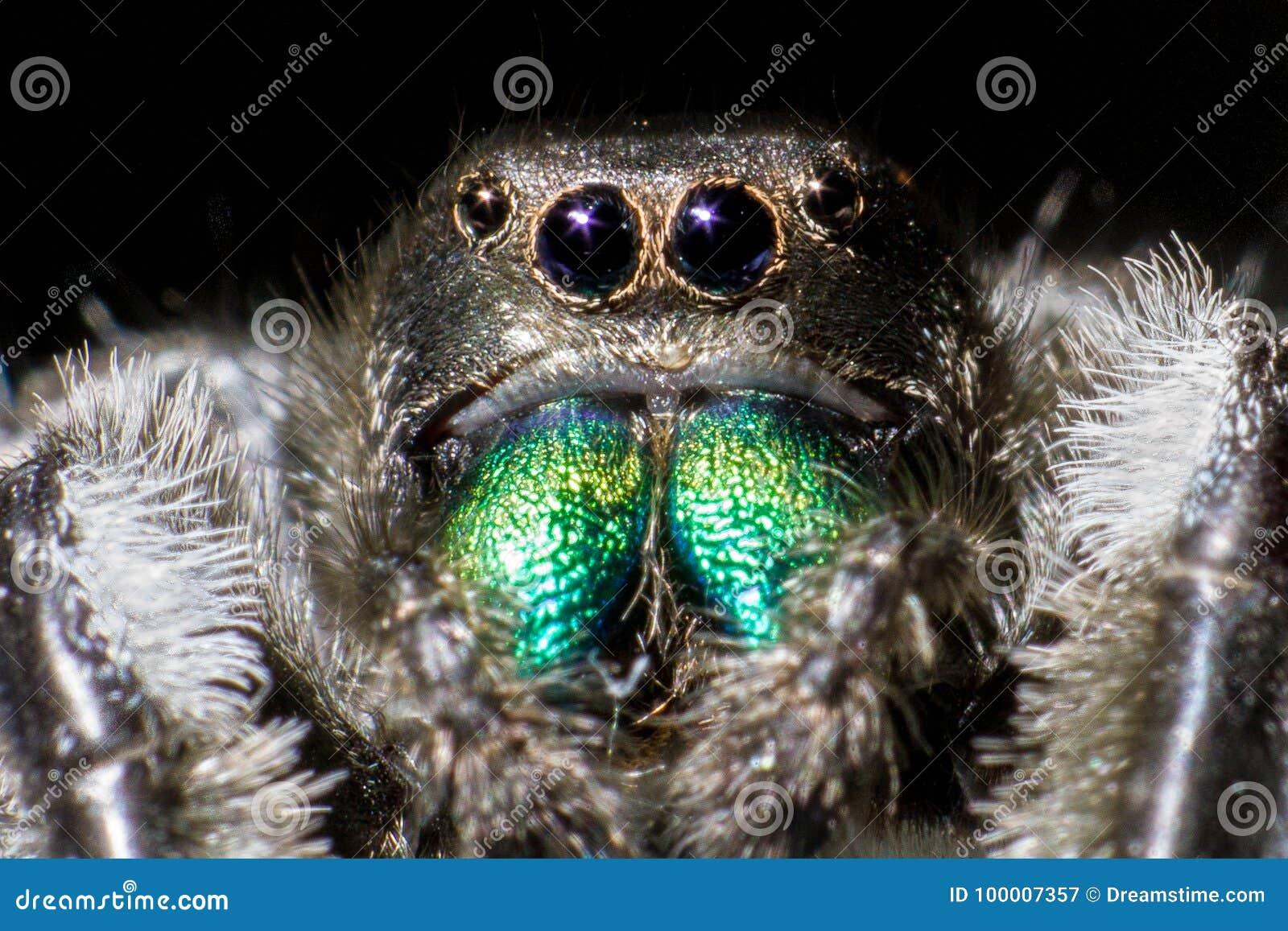 Wysoki skokowy makro- powiekszania fotografii pająk