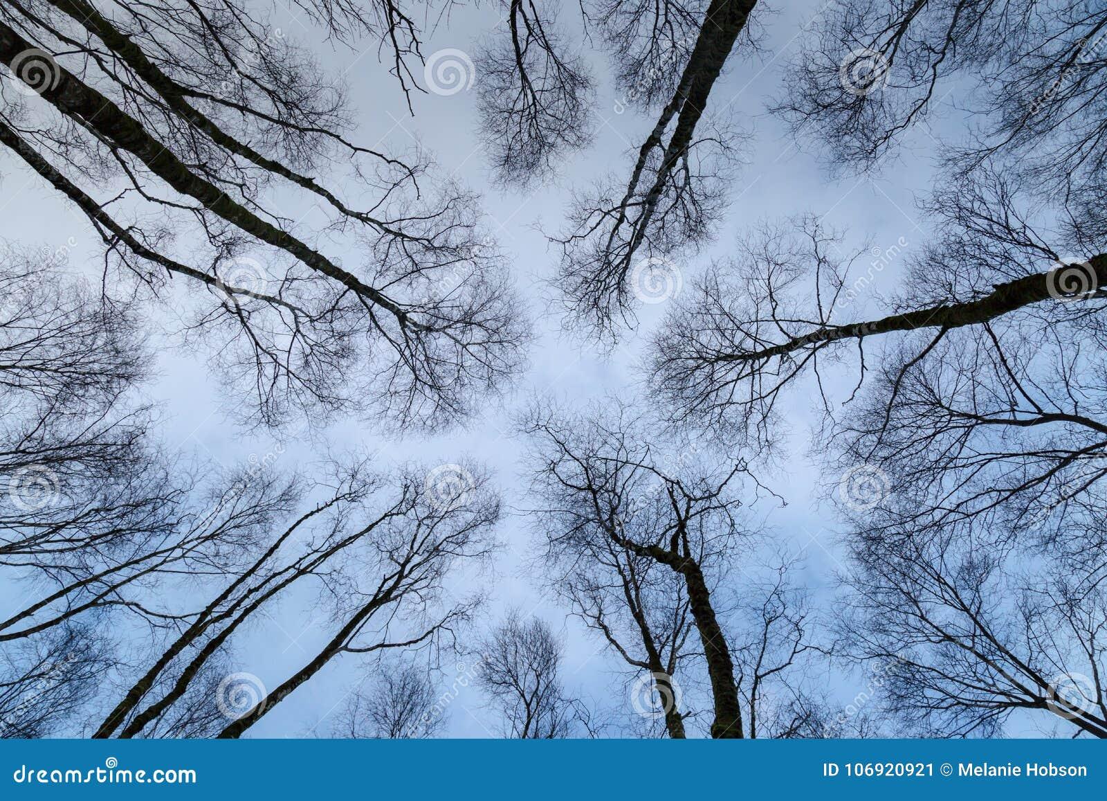 Wysokie drzewa