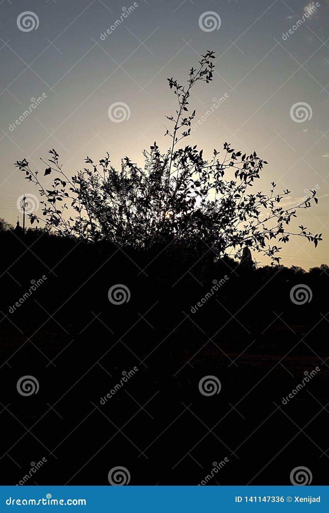 Wysokiego kontrasta drzewna sylwetka i niebo
