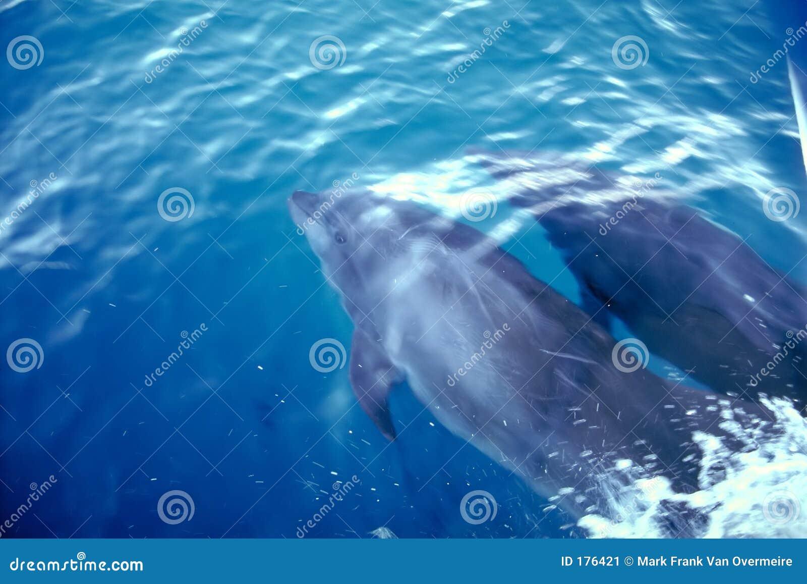 Wyspy Galapagos delfinów