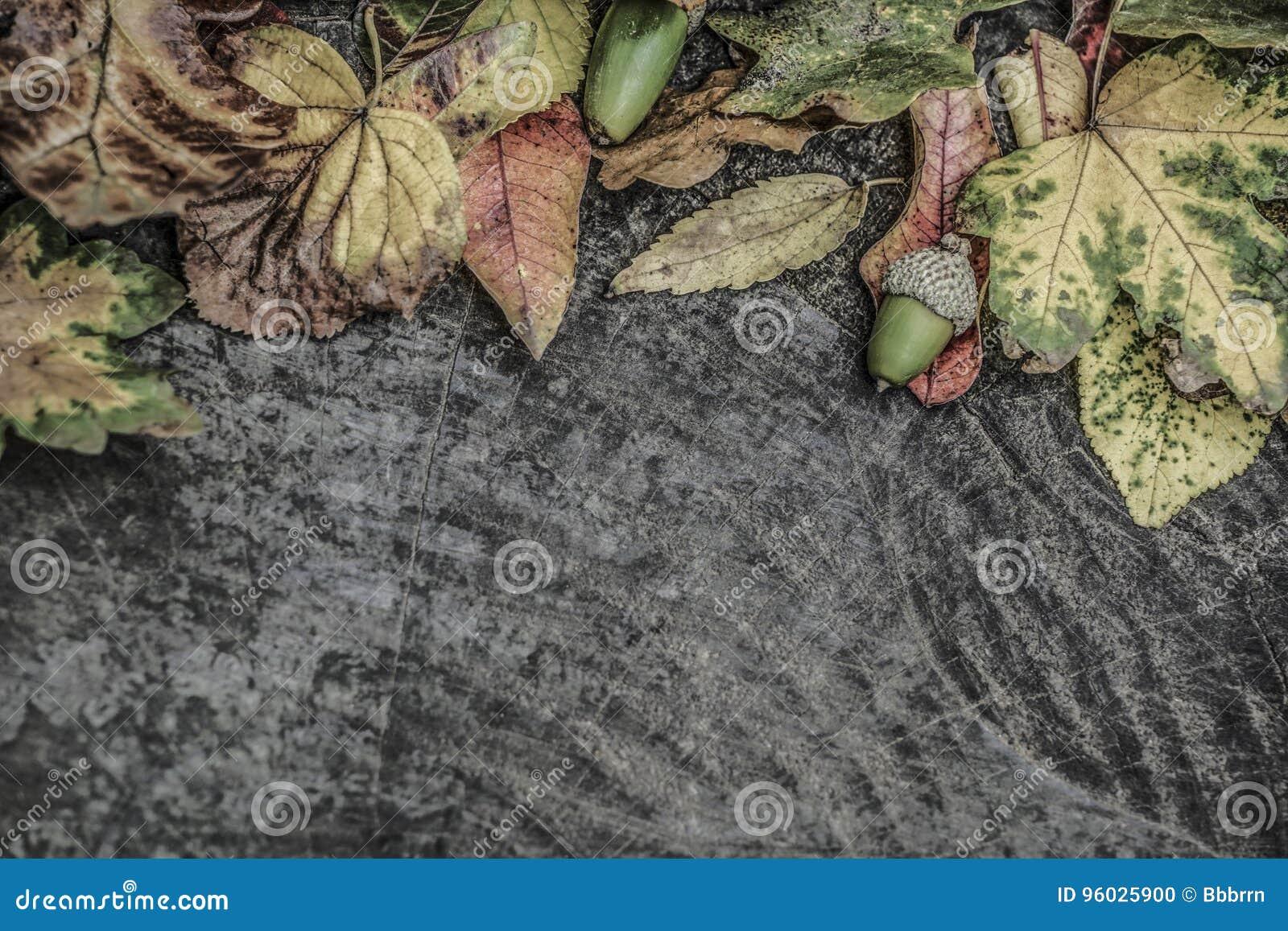 Wysuszeni jesień liście i acorn na drewnianym tle