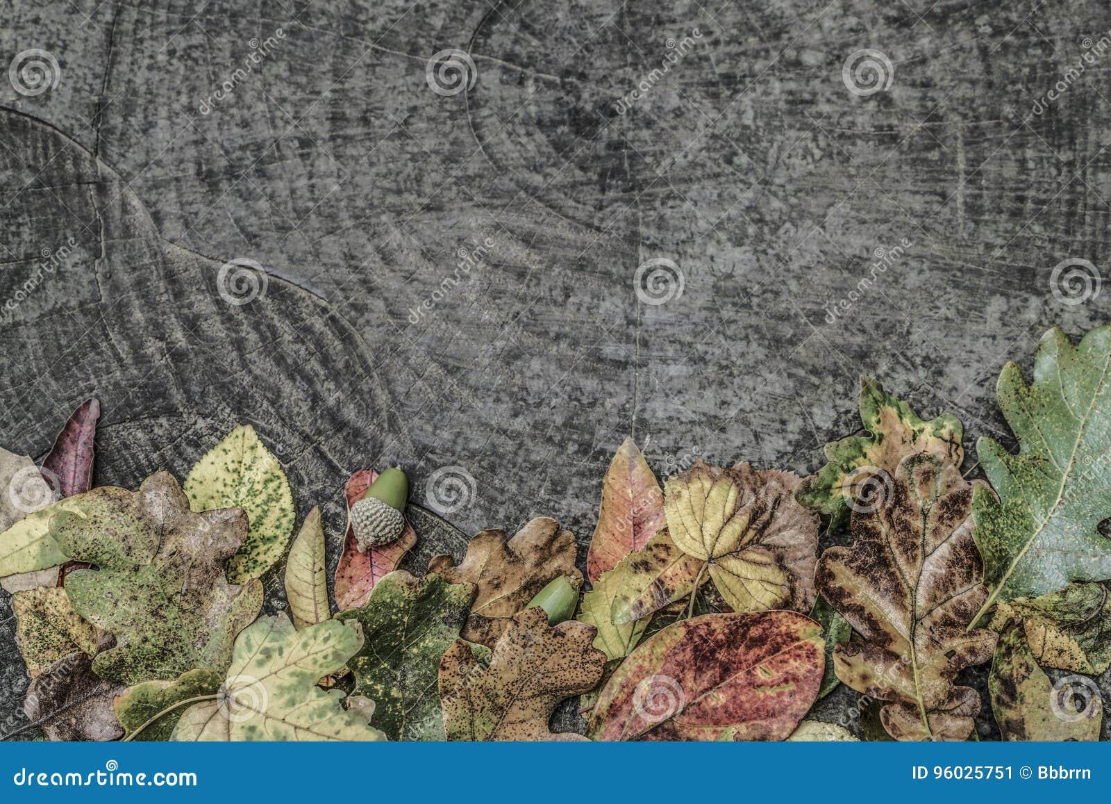 Wysuszeni jesień liście i acorns na drewnianym tle