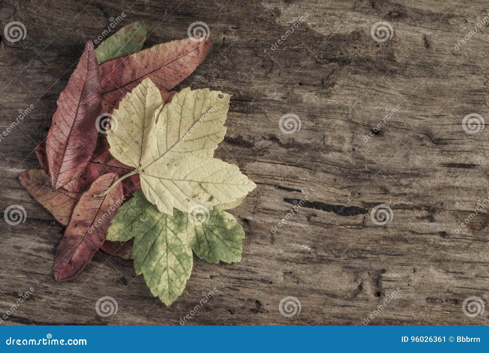 Wysuszeni jesień liście na drewnianym tle