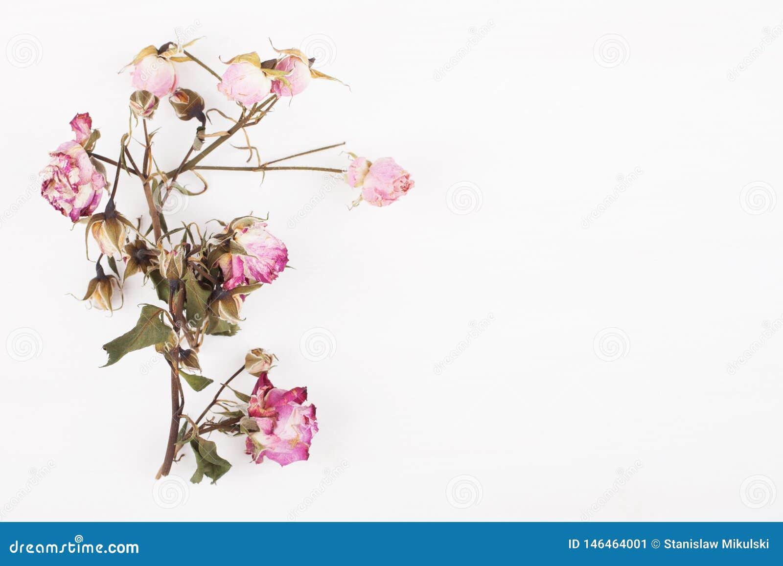 Wysuszeni kwiaty na białym drewnianej deski tle Odg?rny widok
