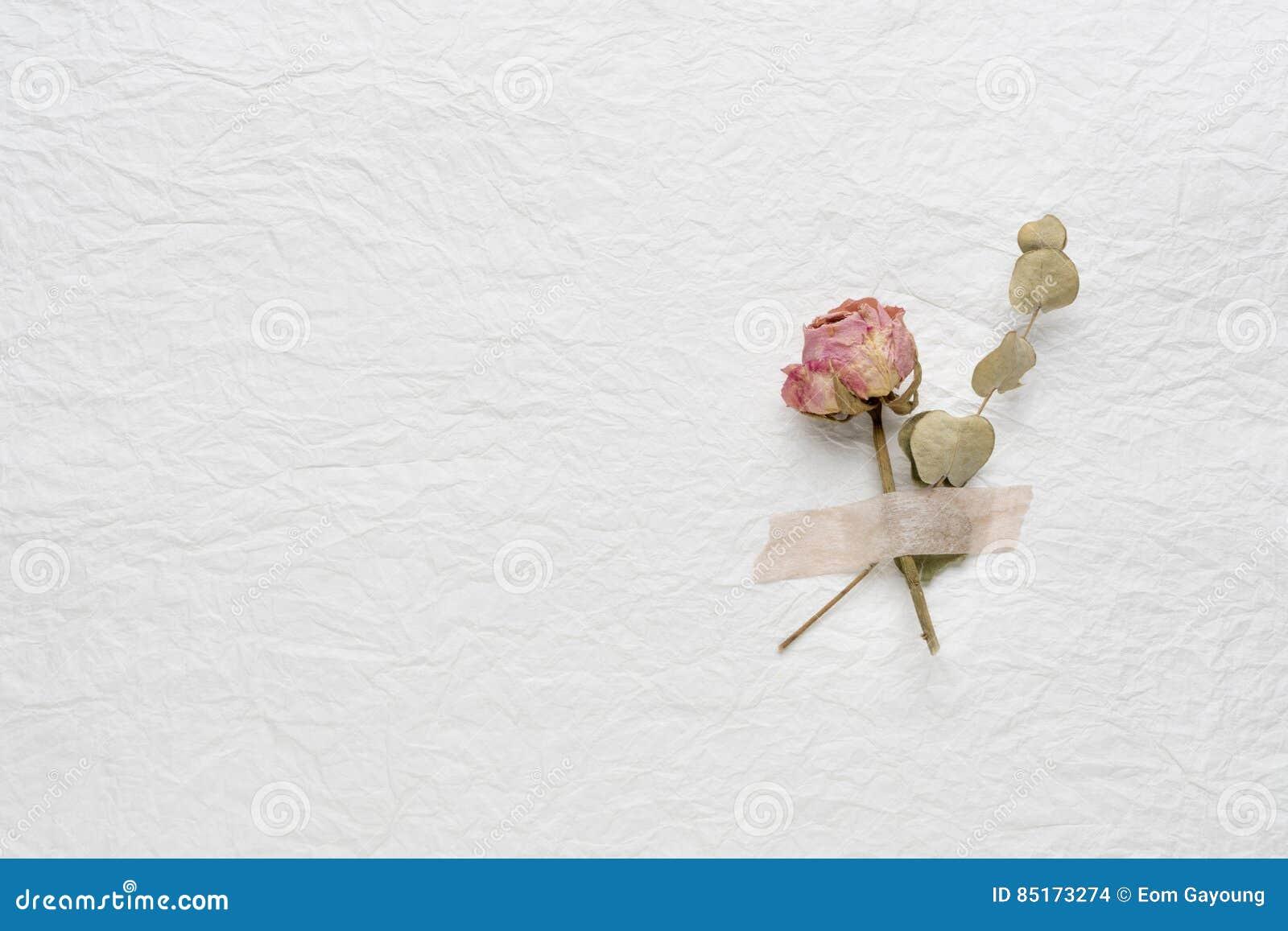 Wysuszeni kwiaty róże na białym papierze Menchie yellow