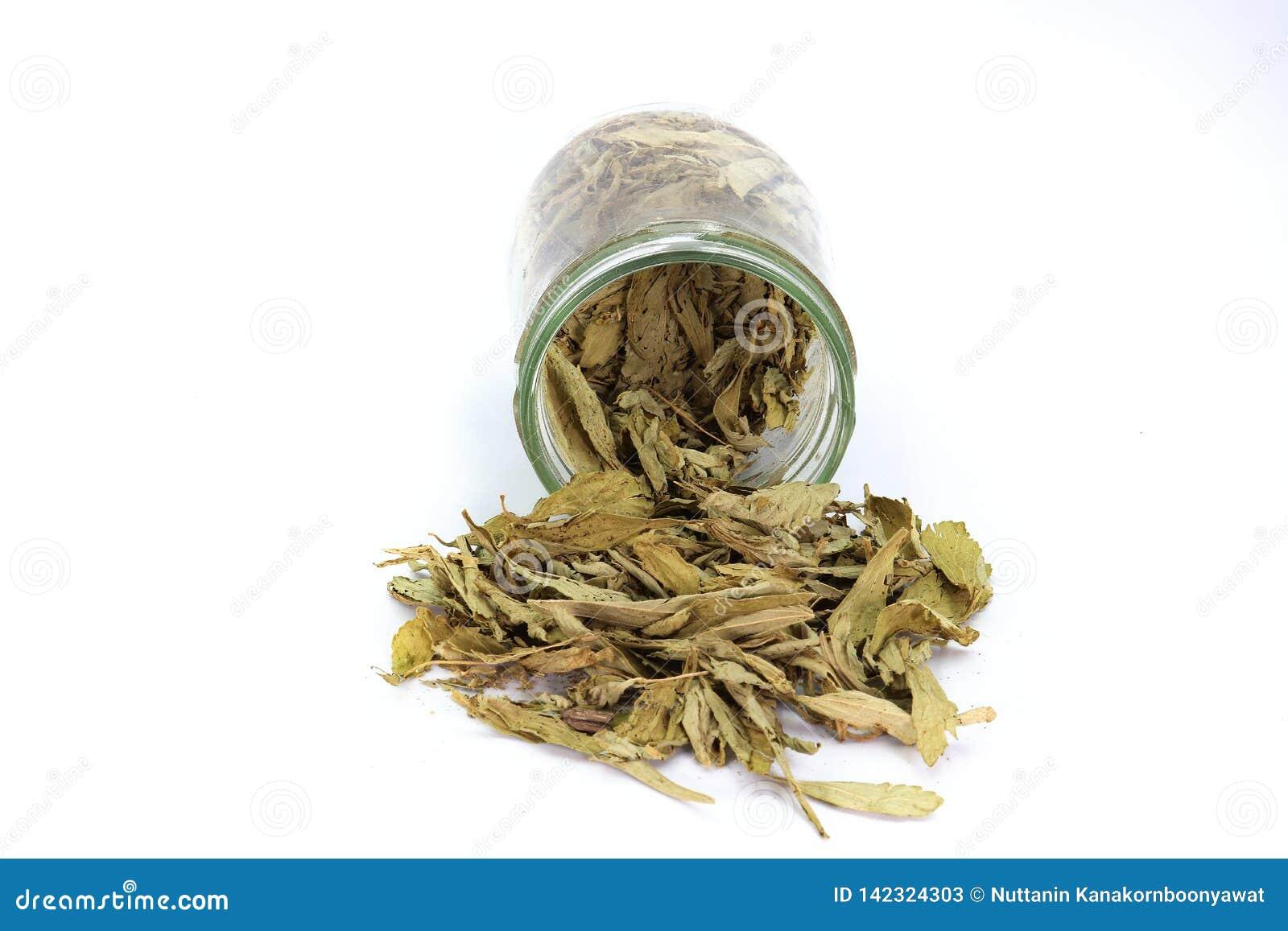 Wysuszeni Stevia Stevia rebaudiana Bertoni liście nalewający z szklanego słoju odizolowywającego na białym tle