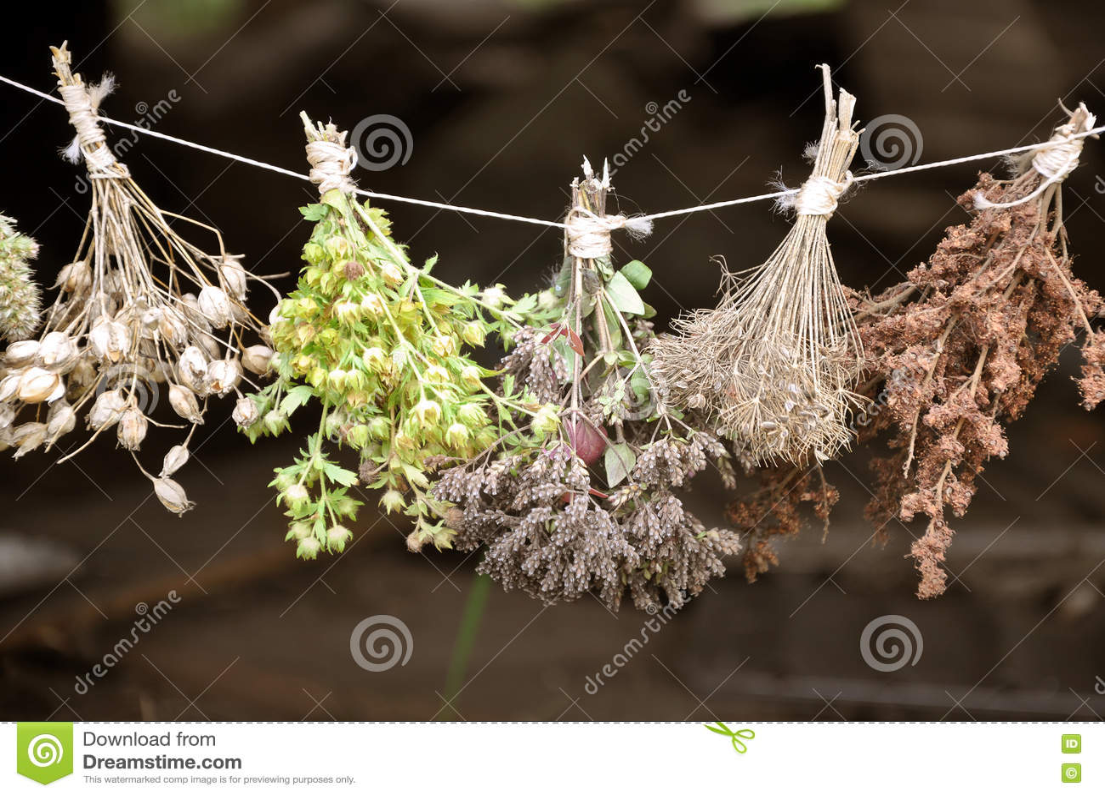 Wysuszeni ziele oprawiający w plikach